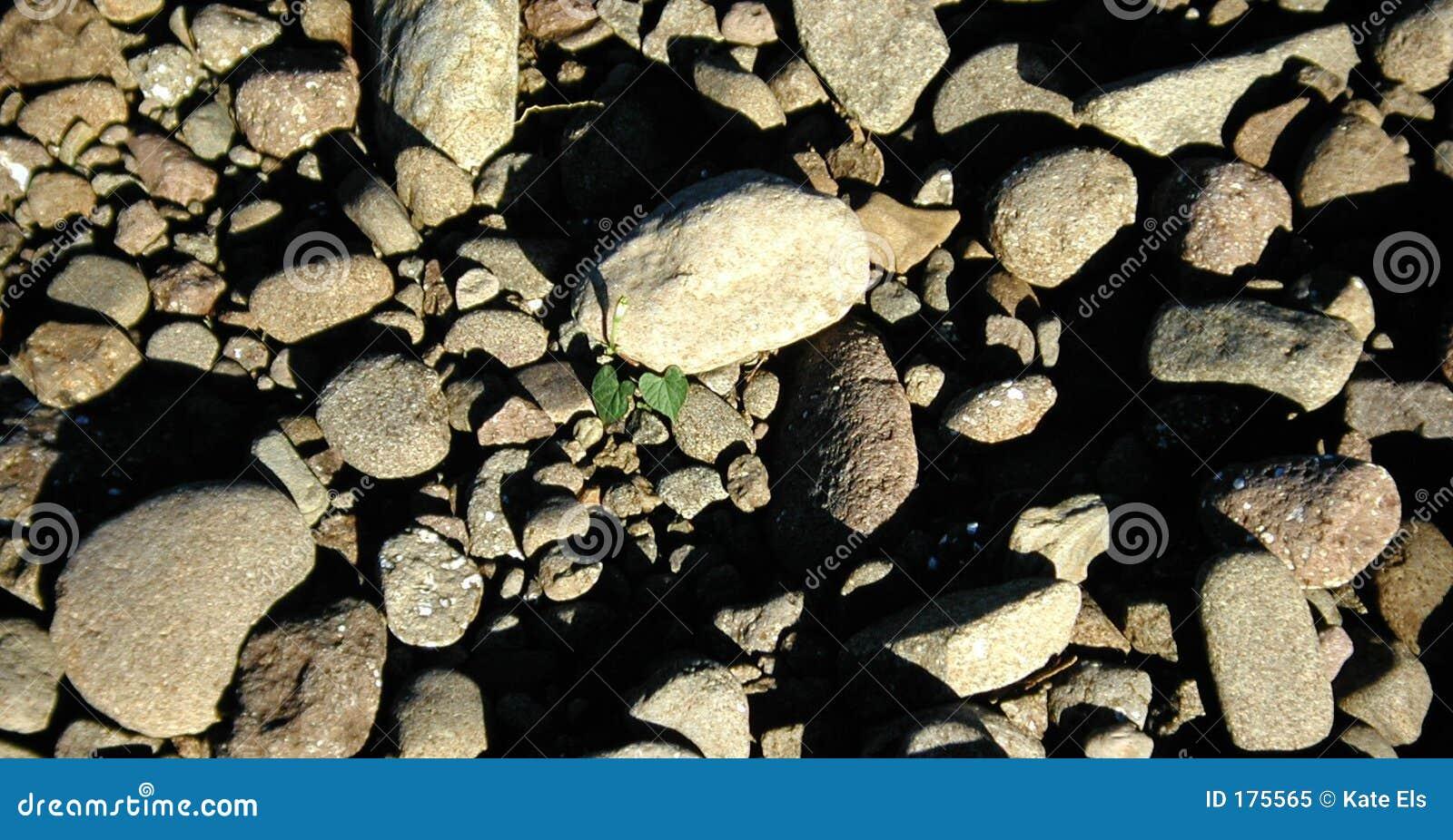 Cama de la roca