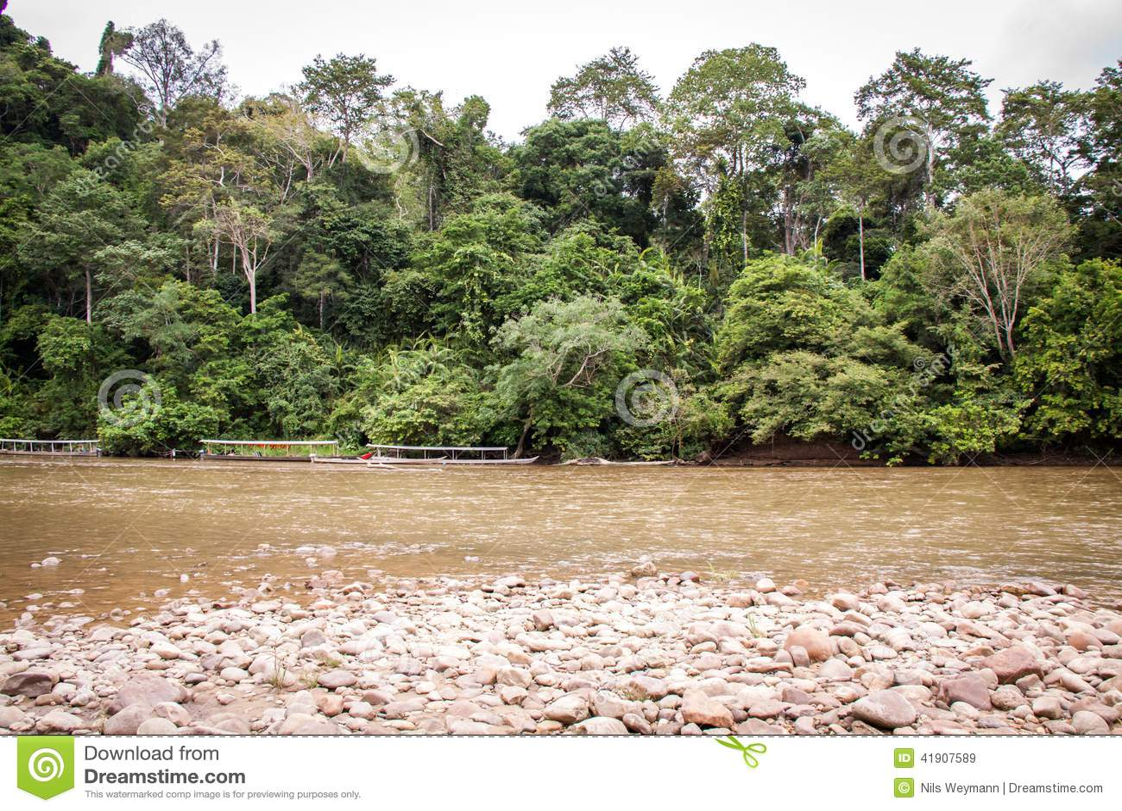 Cama de río pedregosa en una selva verde enorme