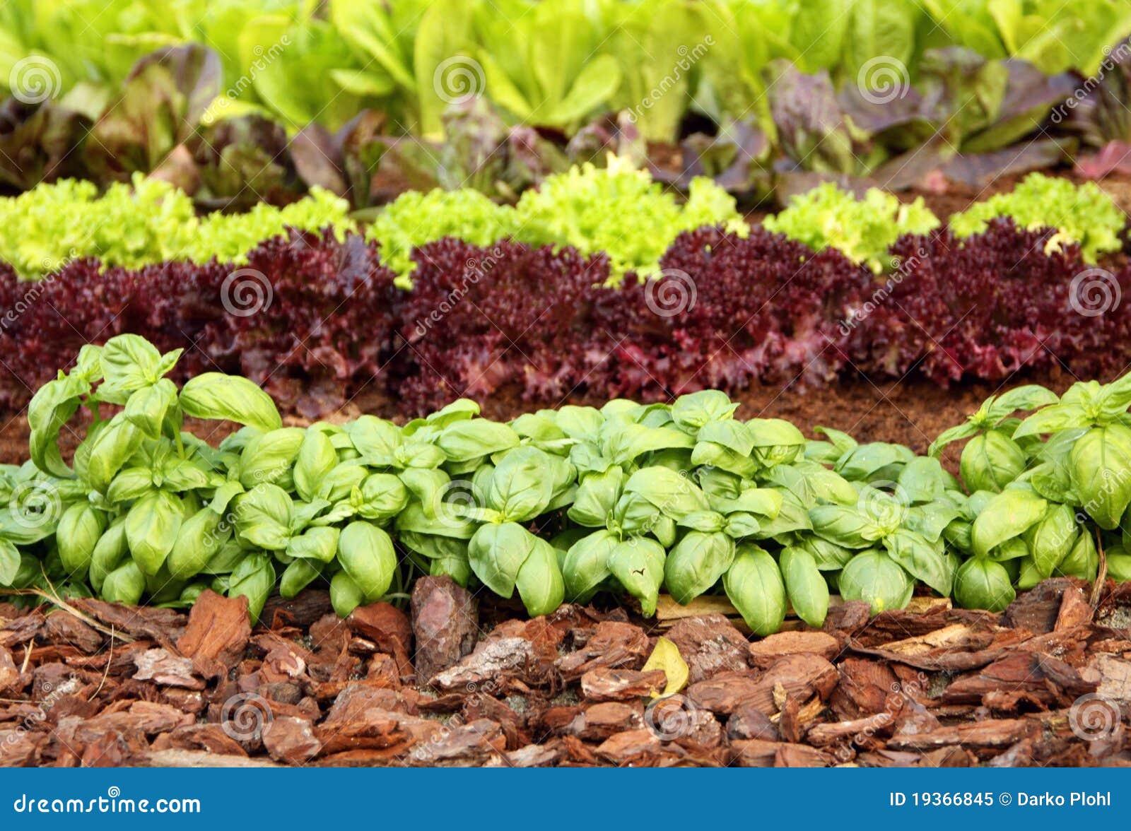 Cama do jardim com vegetais e ervas