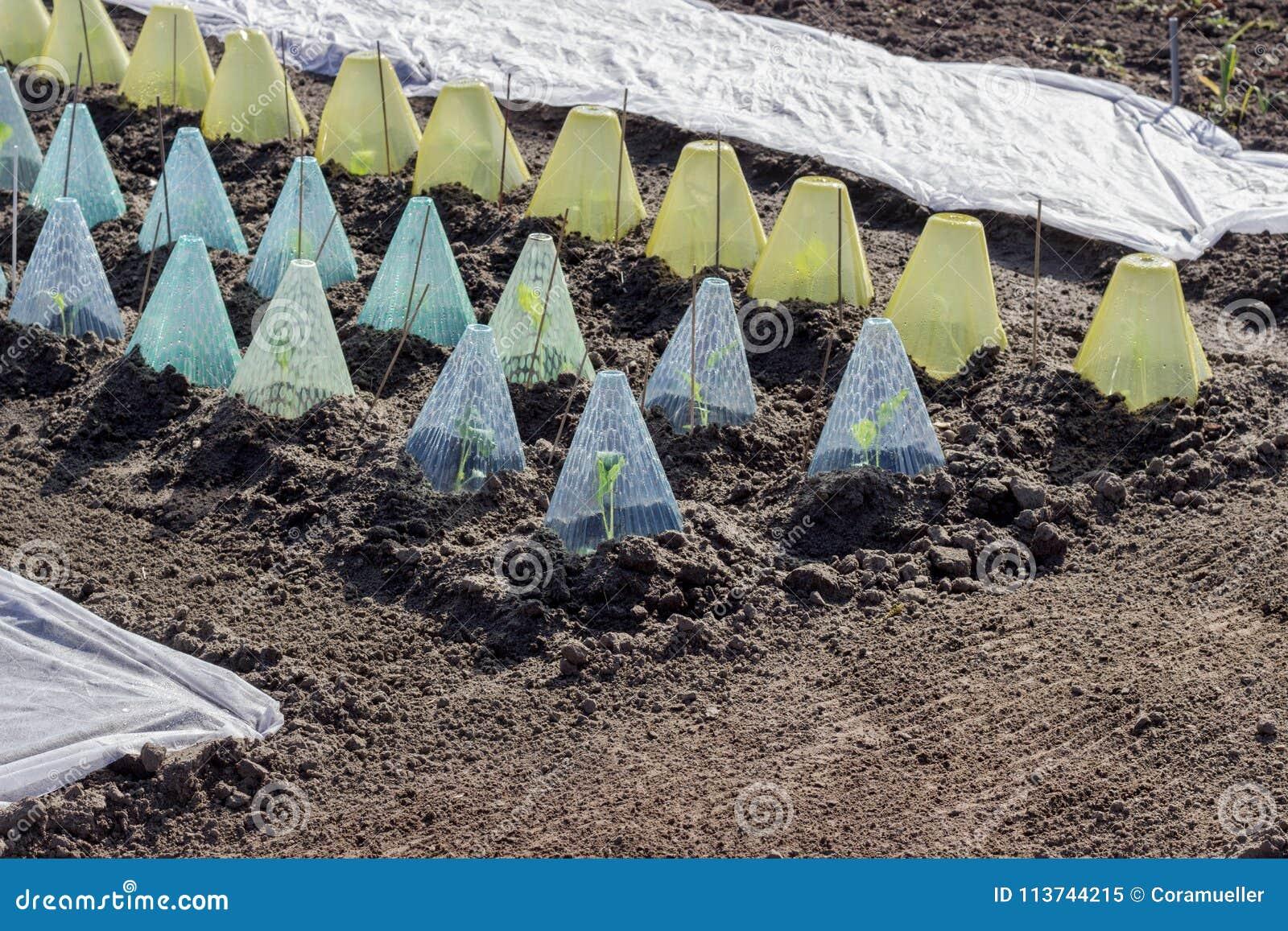 Cama vegetal con las cubiertas y el paño grueso y suave del jardín