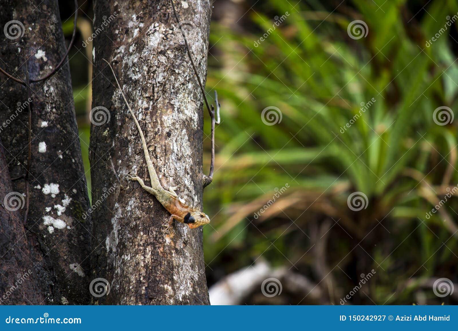 Camaleonte selvaggio su un albero