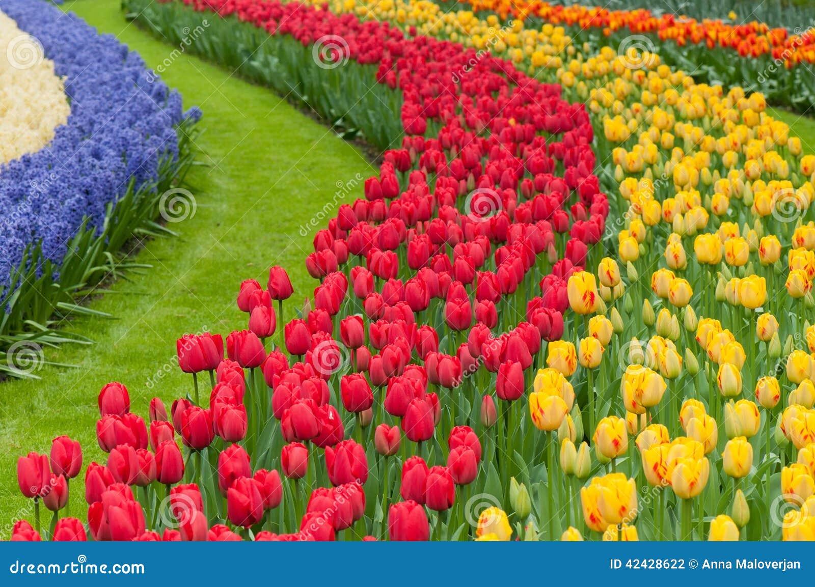 Camas de flor de tulipanes multicolores