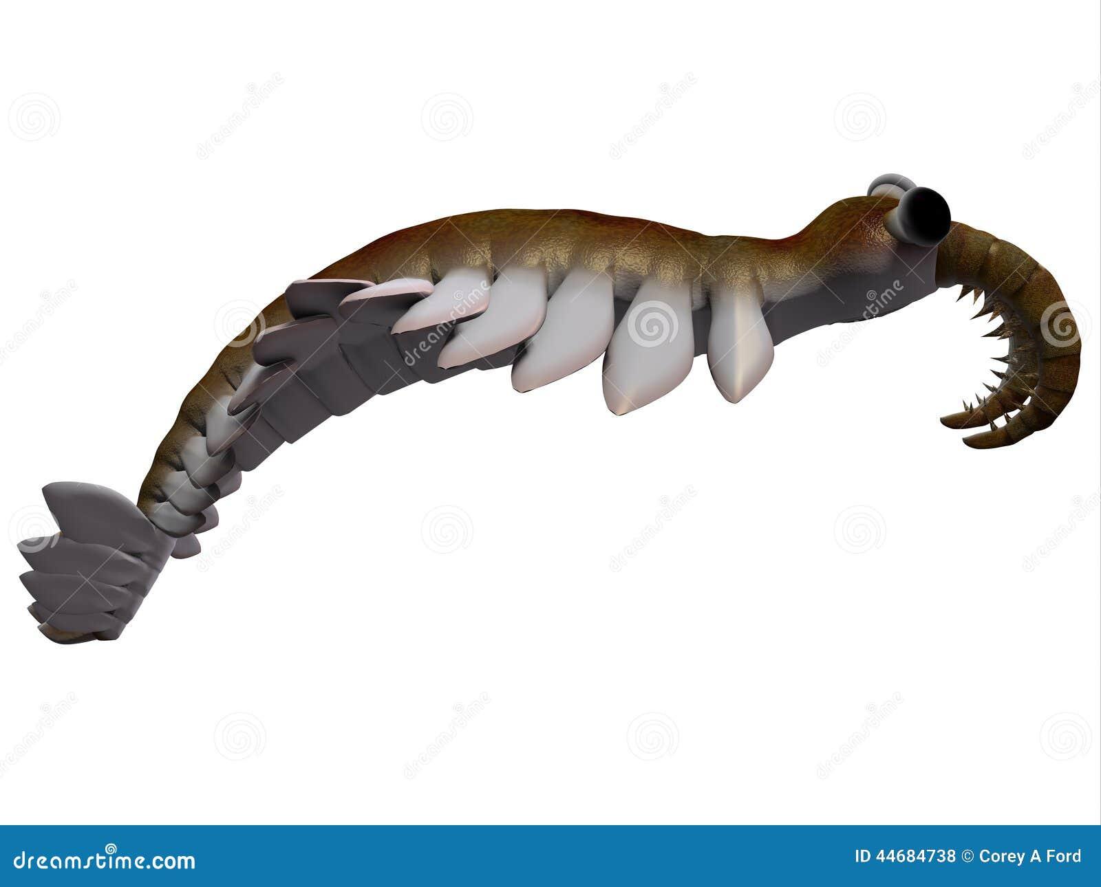 Cambrian Anomalocaris Side Profile Stock Illustration