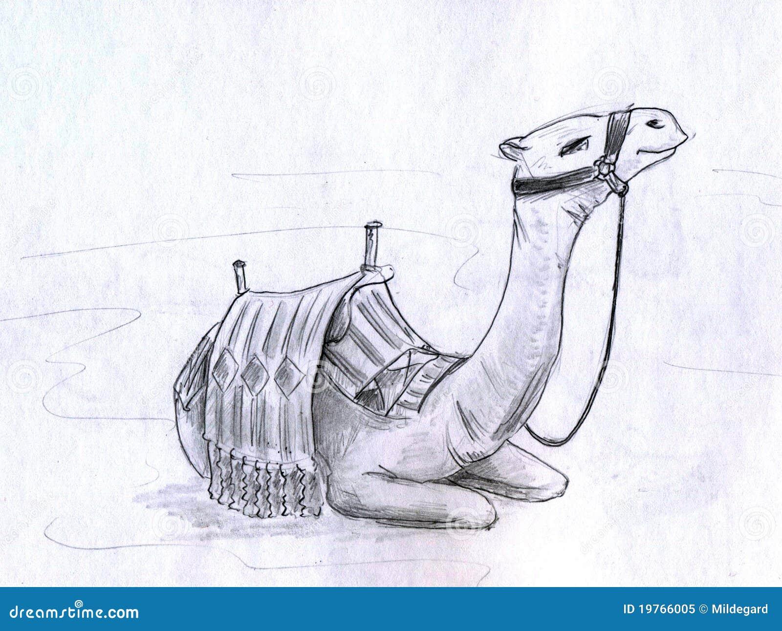 Camel stock illustration. Illustration of image, kneel ...
