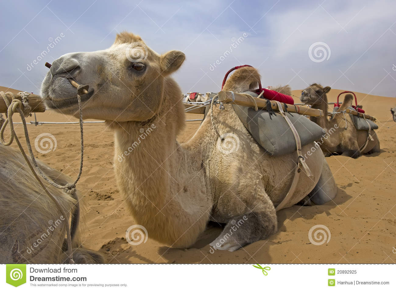 140 Words Essay for kids on the camel