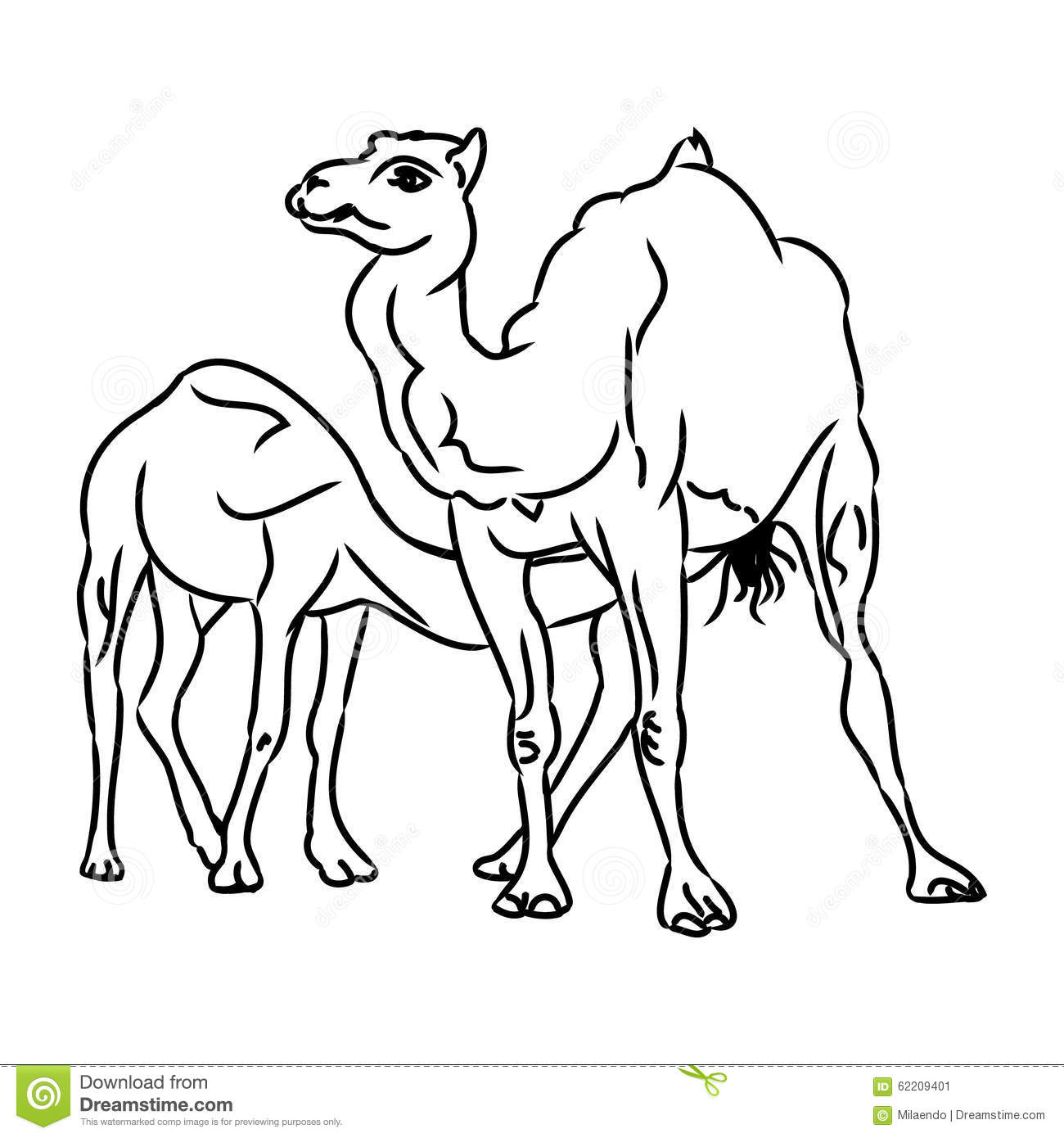 Camel And Camel (simple Sketch) Stock Vector - Illustration of
