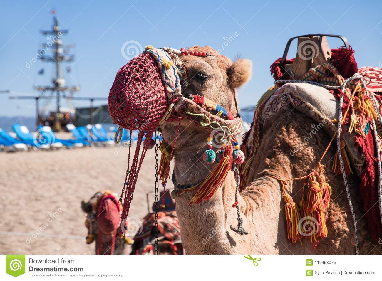Camel, decorated with brushes and ornaments in national style