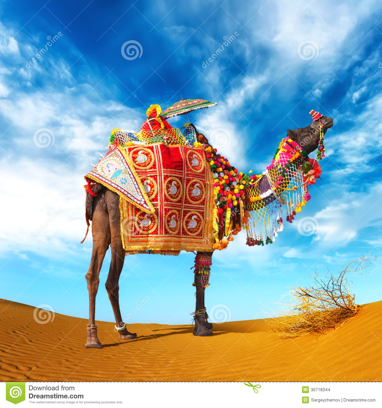 Camel In Desert Stock Photo Image Of India, Attraction -3642