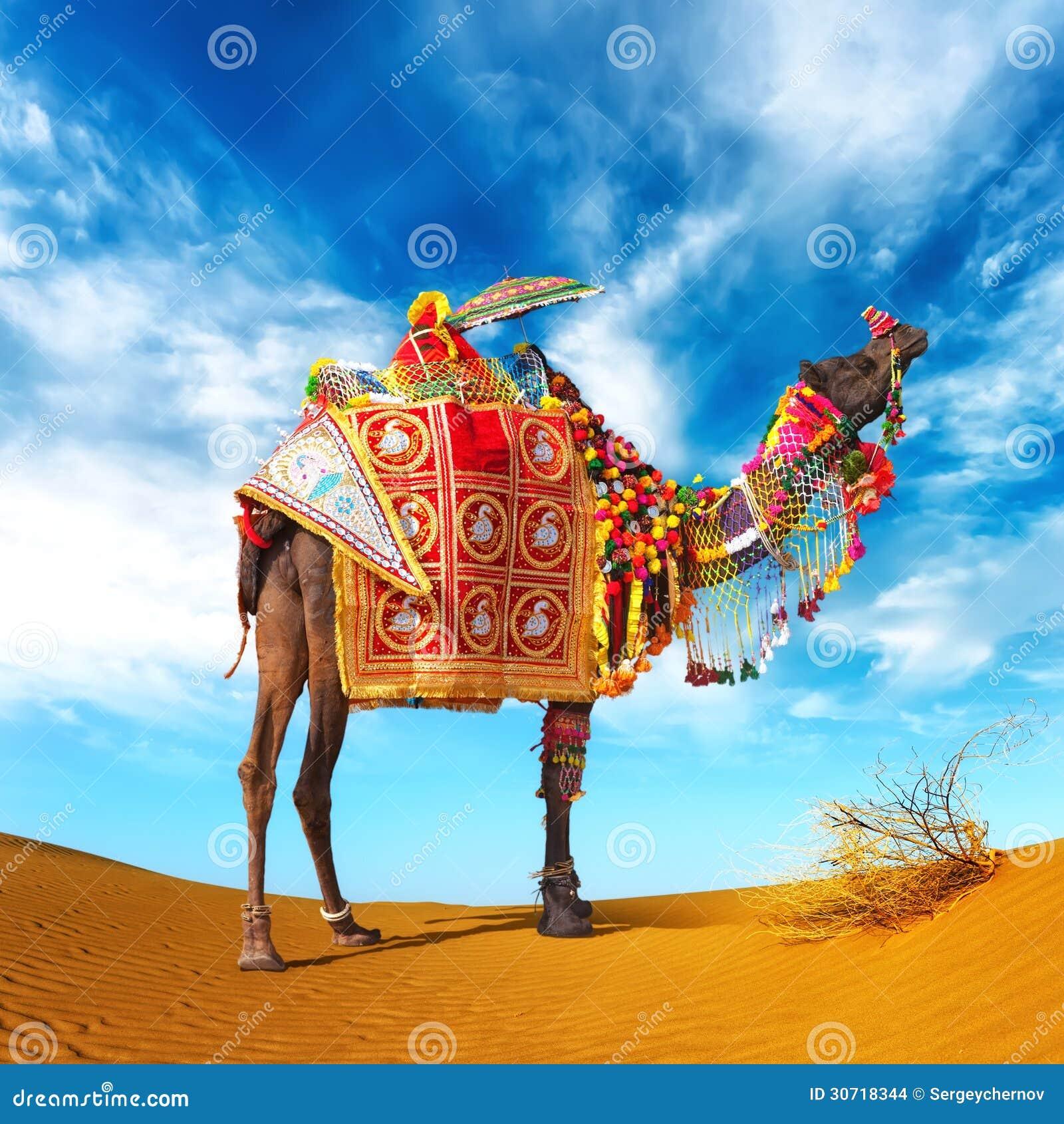 camel in desert stock images image 30718344. Black Bedroom Furniture Sets. Home Design Ideas