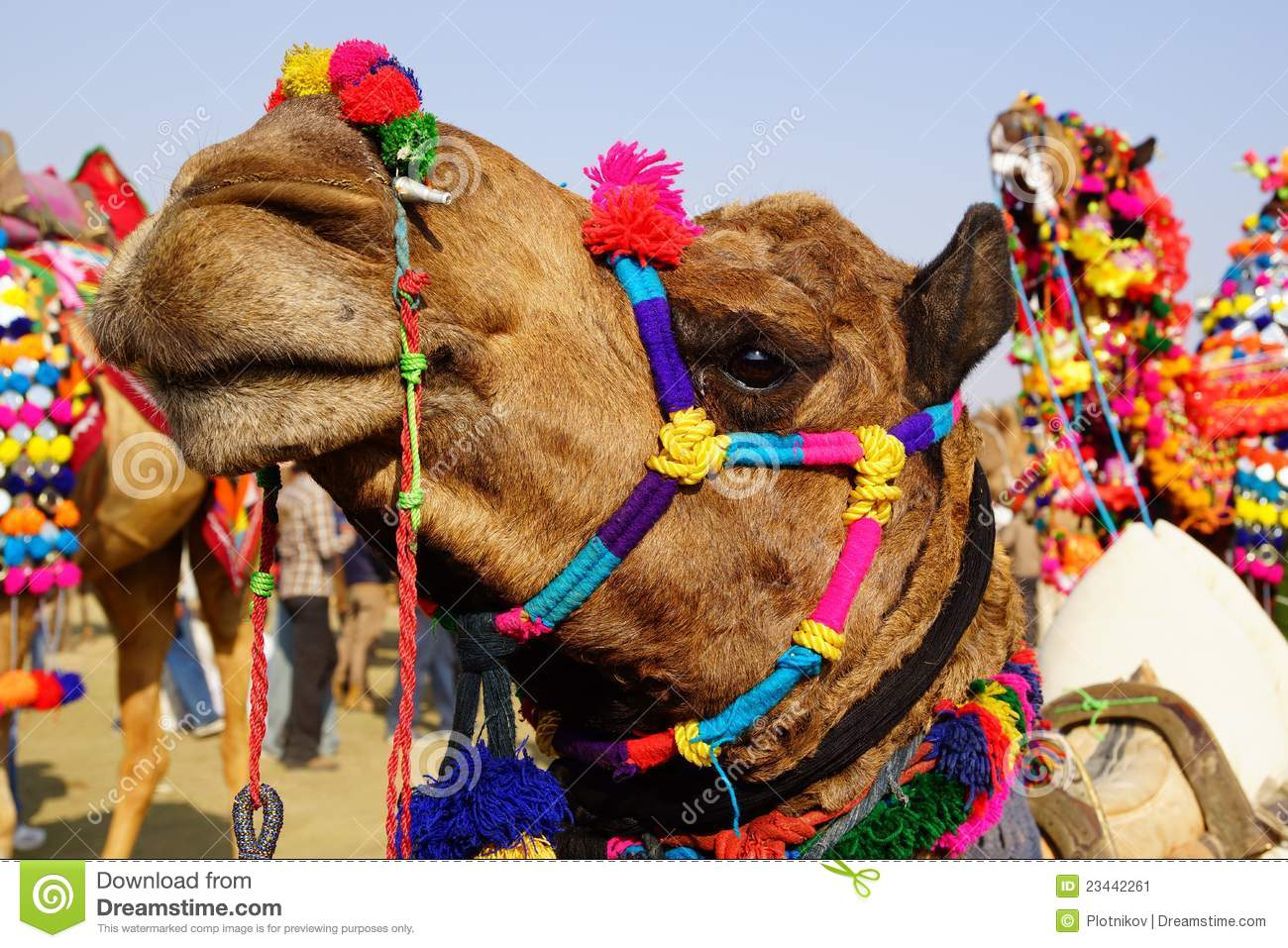 Camel Festival In Bikaner, India Stock Image - Image: 23442261