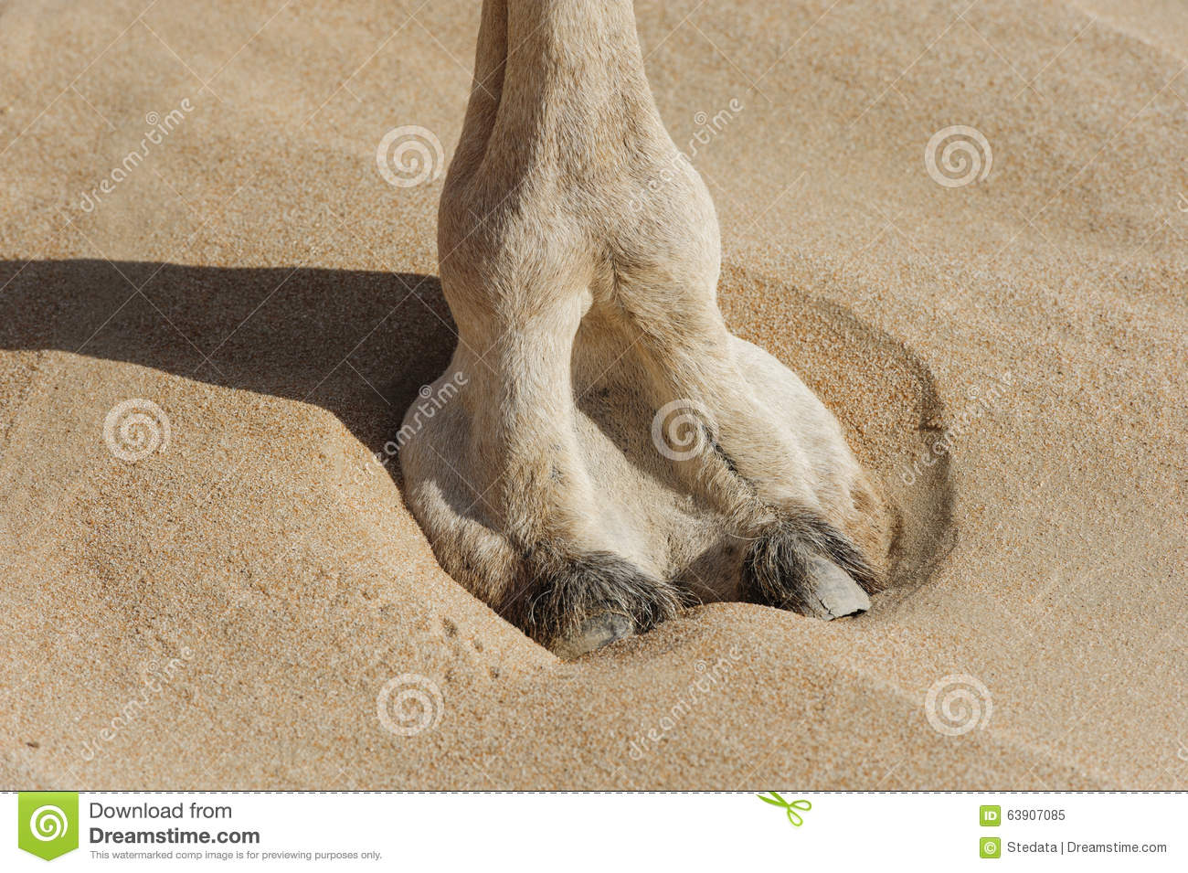 Image result for camel feet