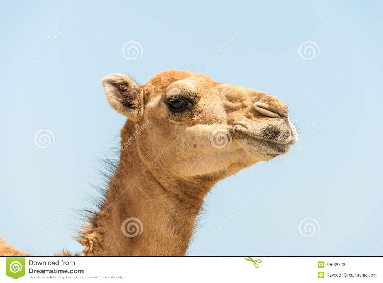 how to make a camel head