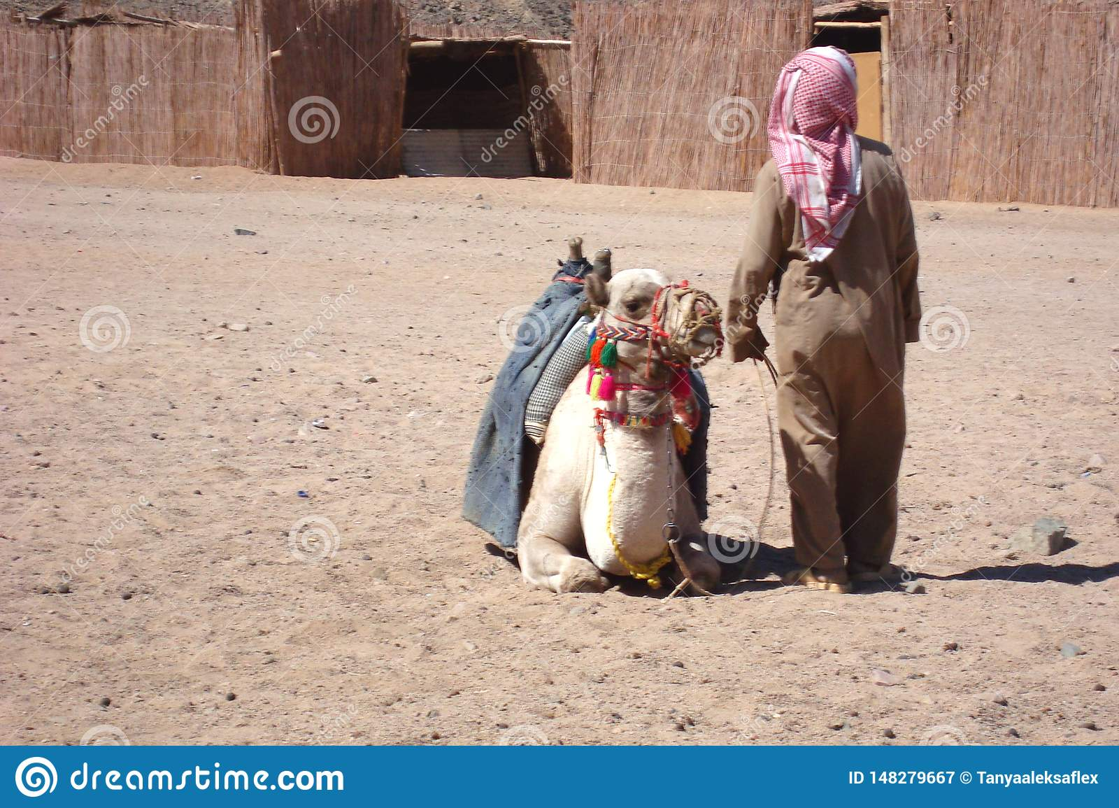 Camel with the owner in an Egyptian village.