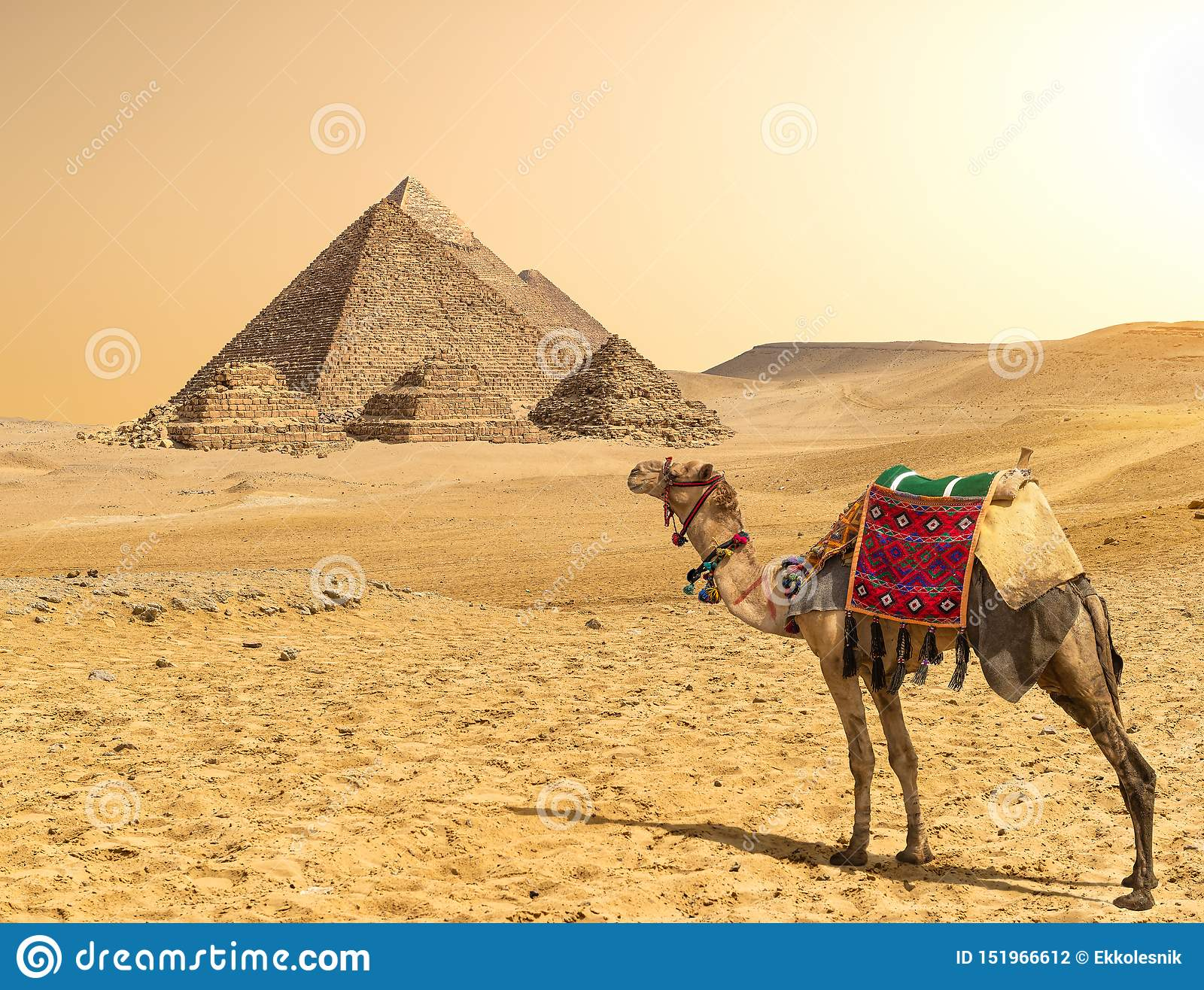 Camel and Pyramids in a row