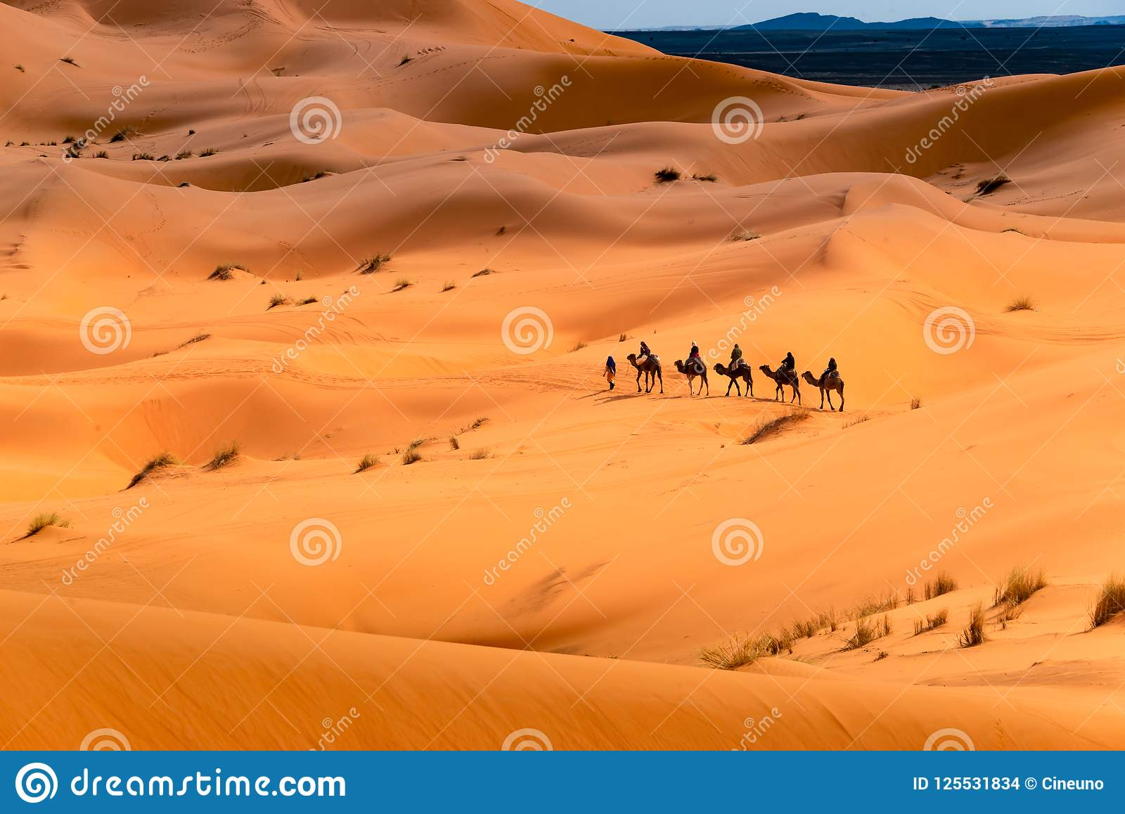 Camel ride through the desert