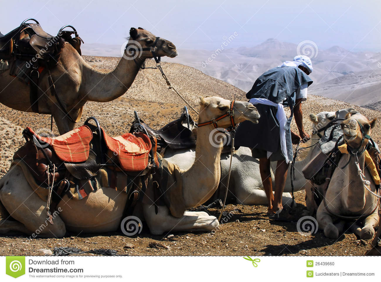 Camel ride in the Judean Desert