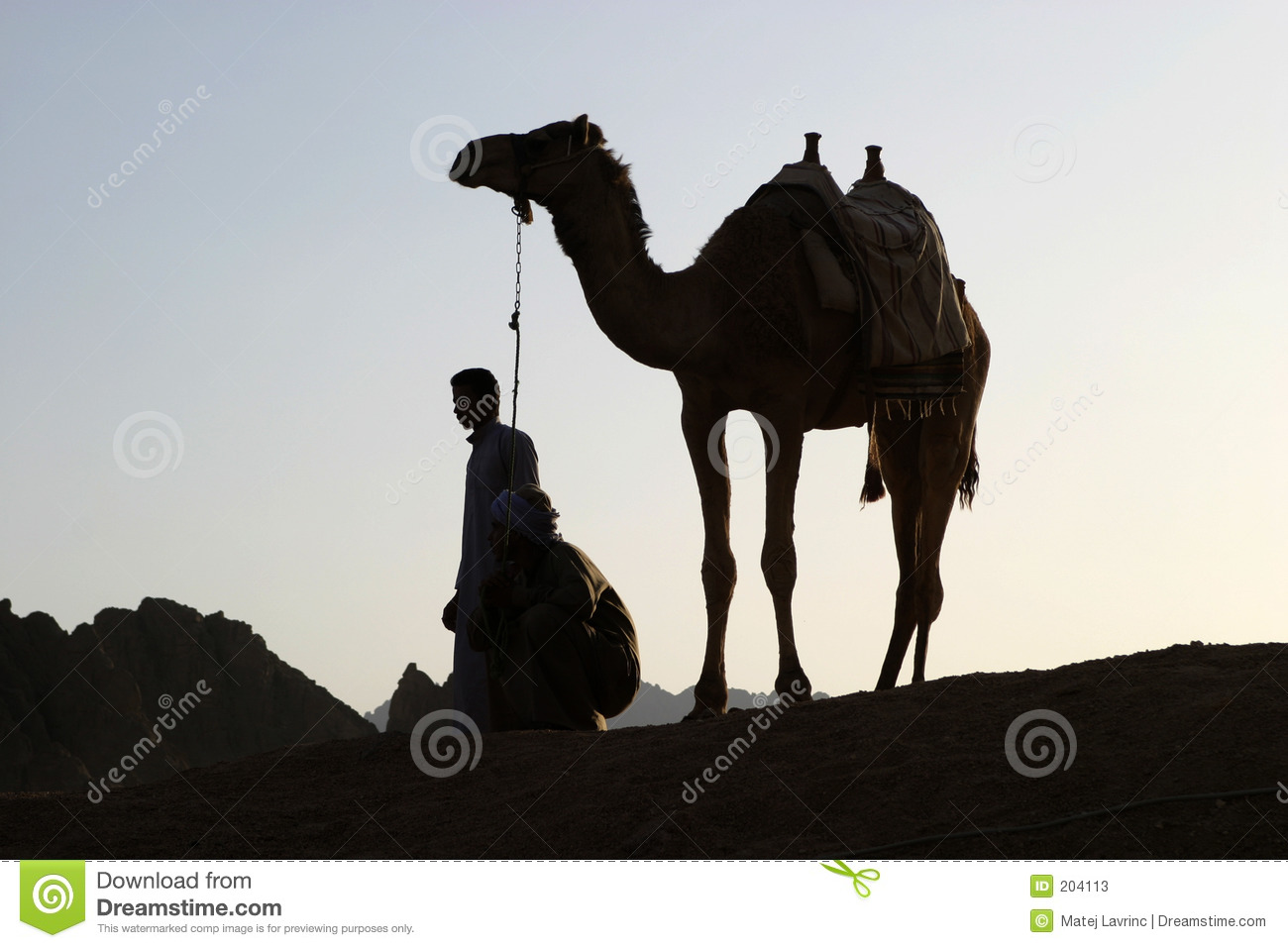Camel in sunset