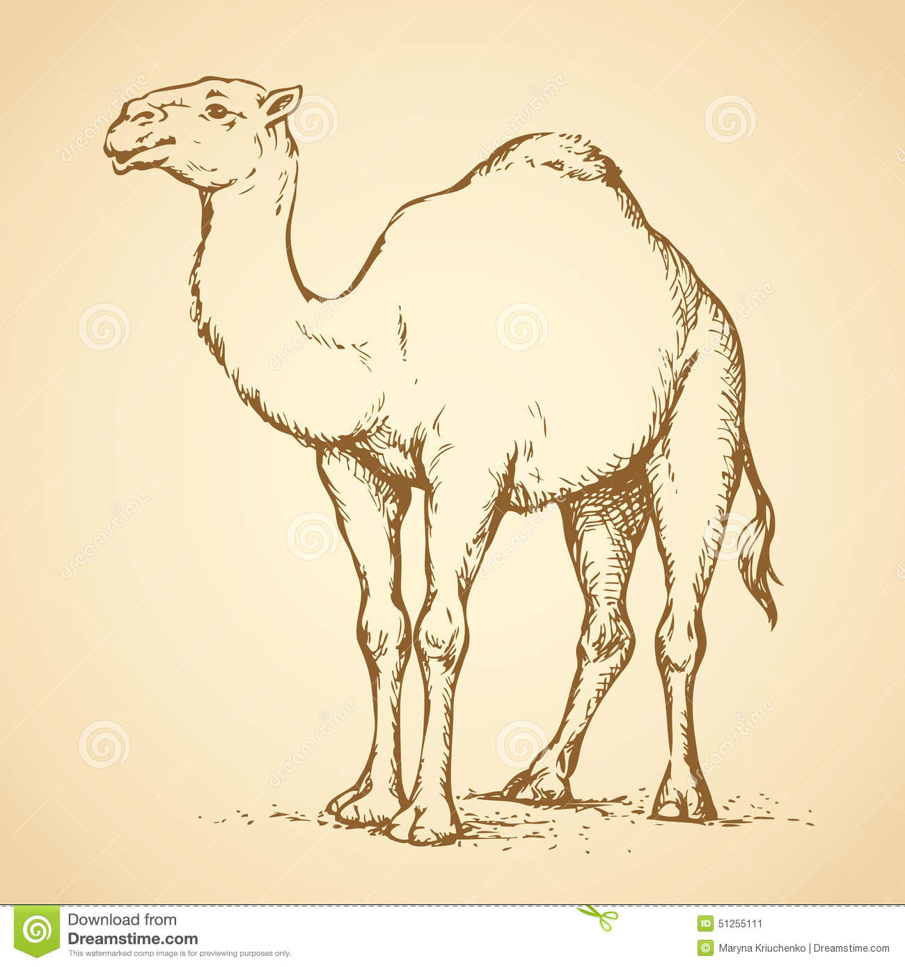 Camel vector drawing stock vector image 51255111 for 3d sketch online free