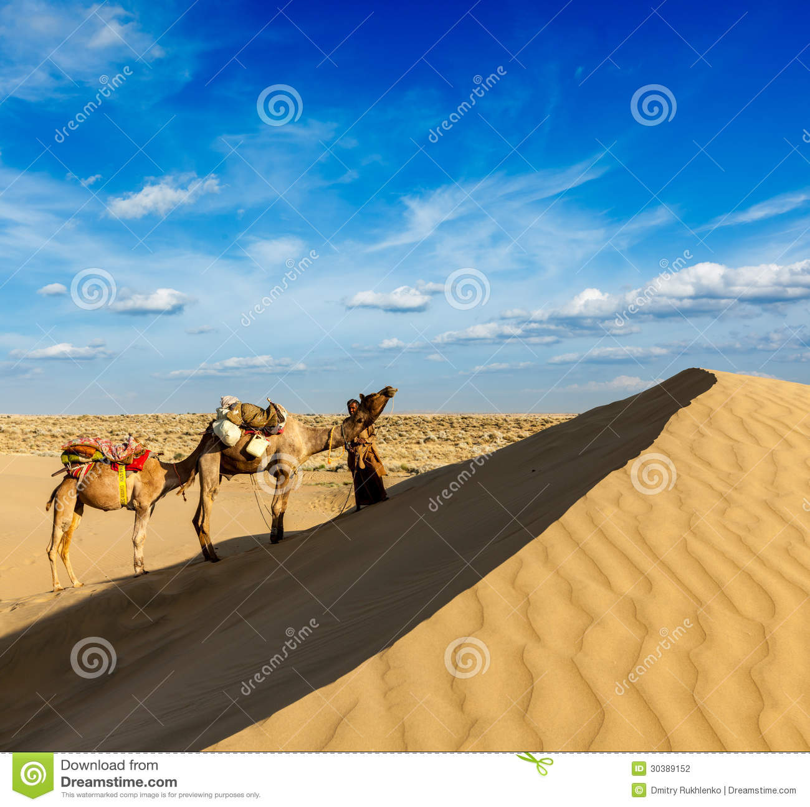Cameleer (водитель верблюда) с верблюдами в дюнах пустыни Thar. Raj