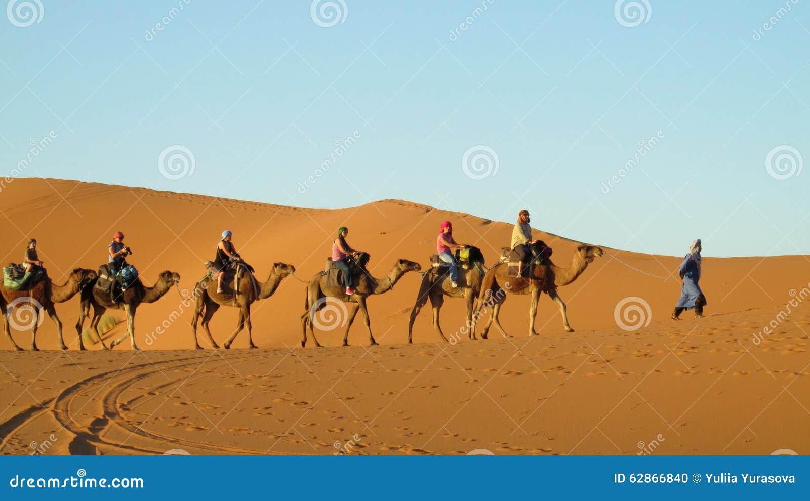 Cameleer With Camel Caravan In Desert Editorial Image