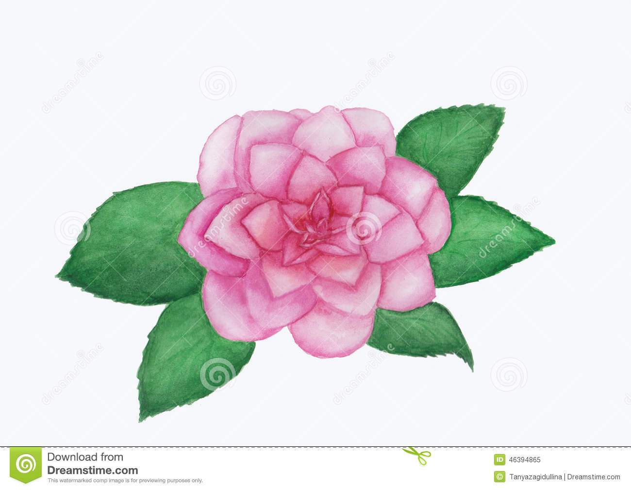 Camellia Illustration Camellia Flower Waterc...