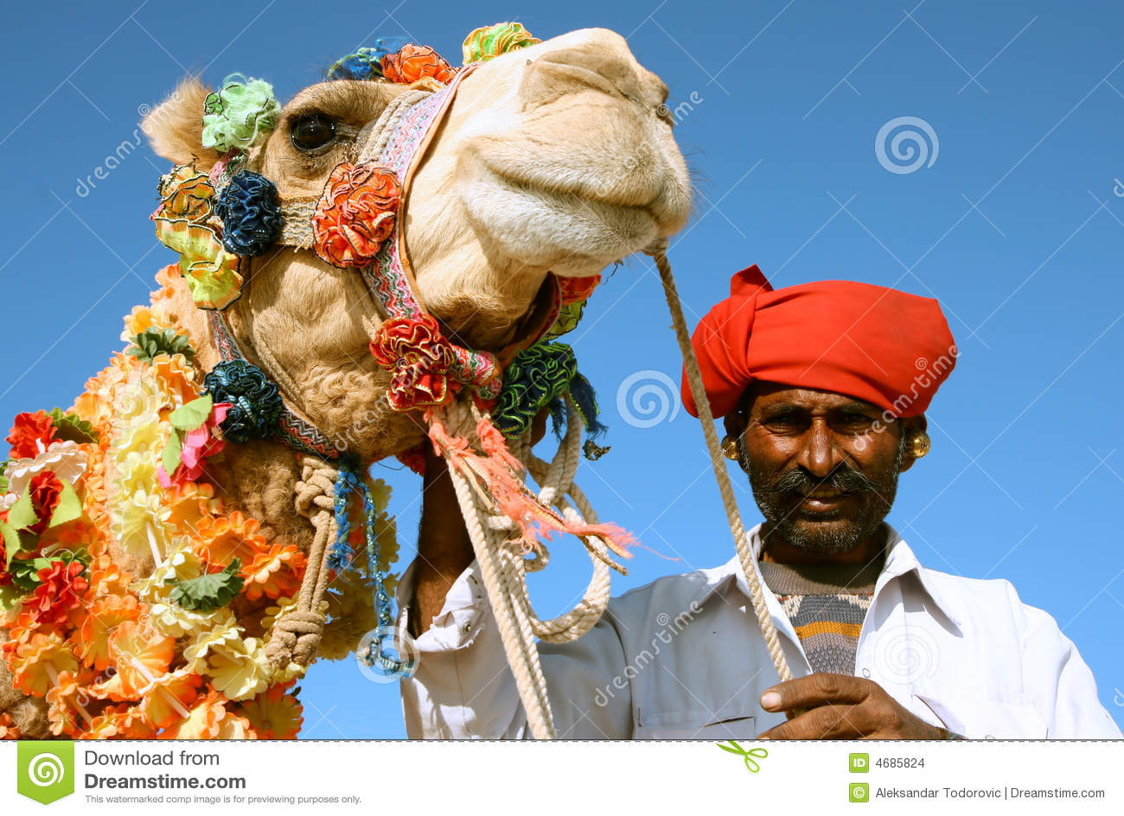 Camelo no safari