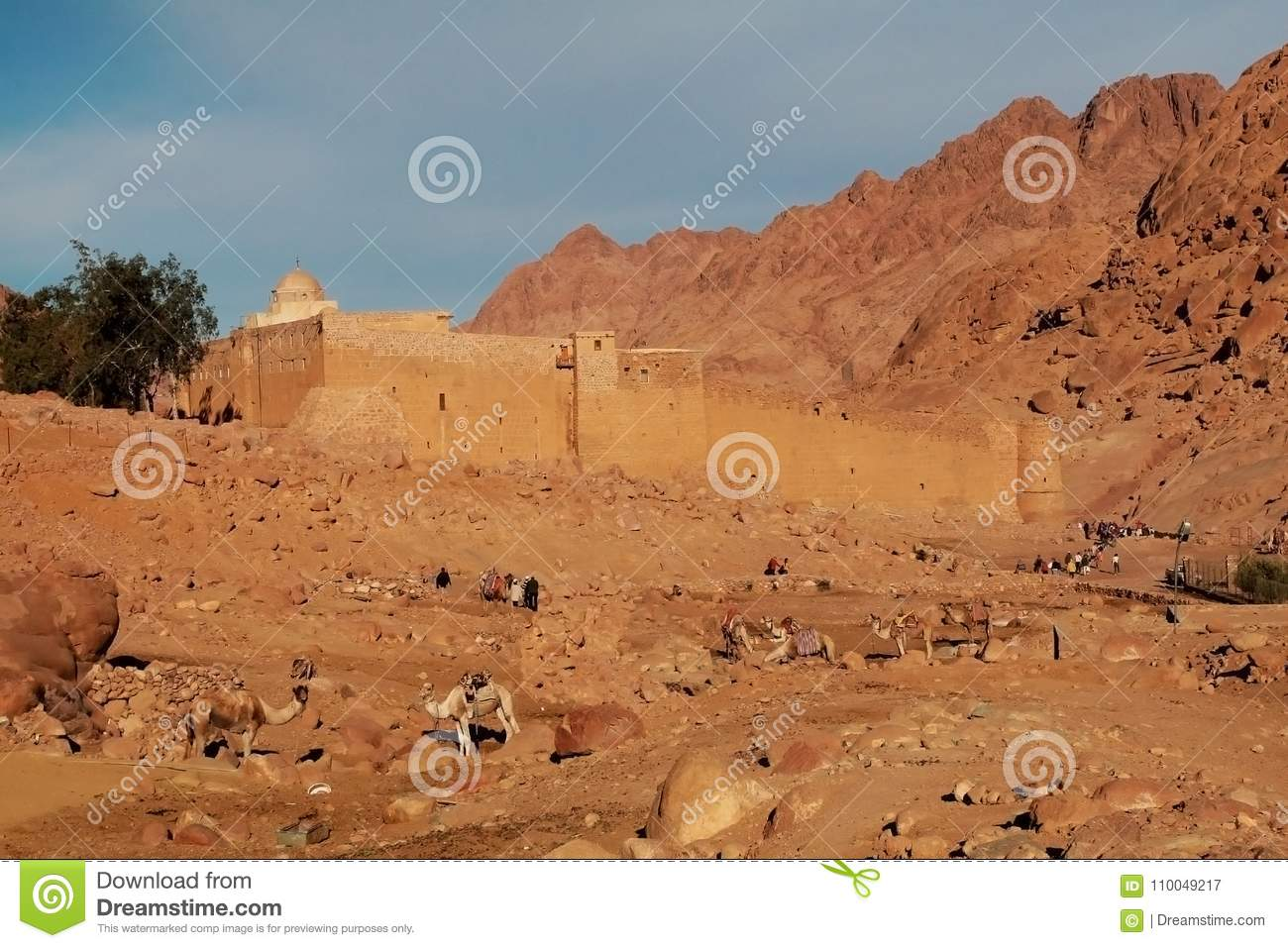 camels on the background of the ancient ruins of fortress-monastery