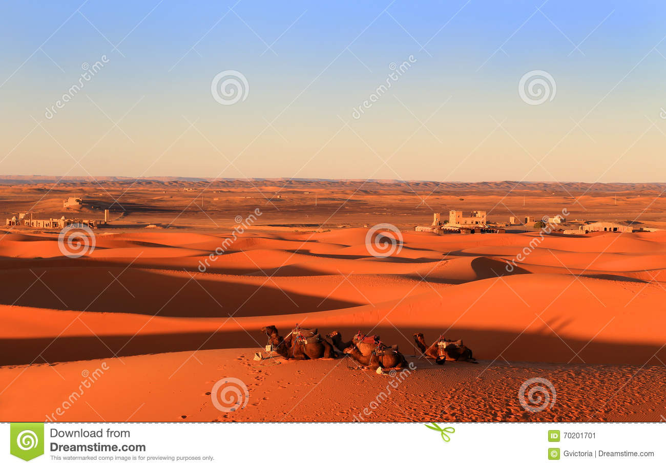 Camels In The Sahara Desert At Sunset Editorial Photo ...