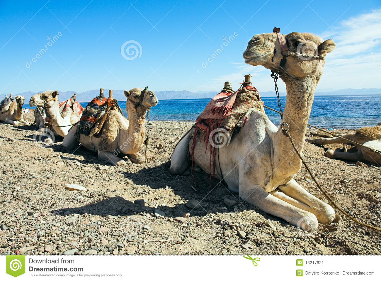 essays on camel in hindi