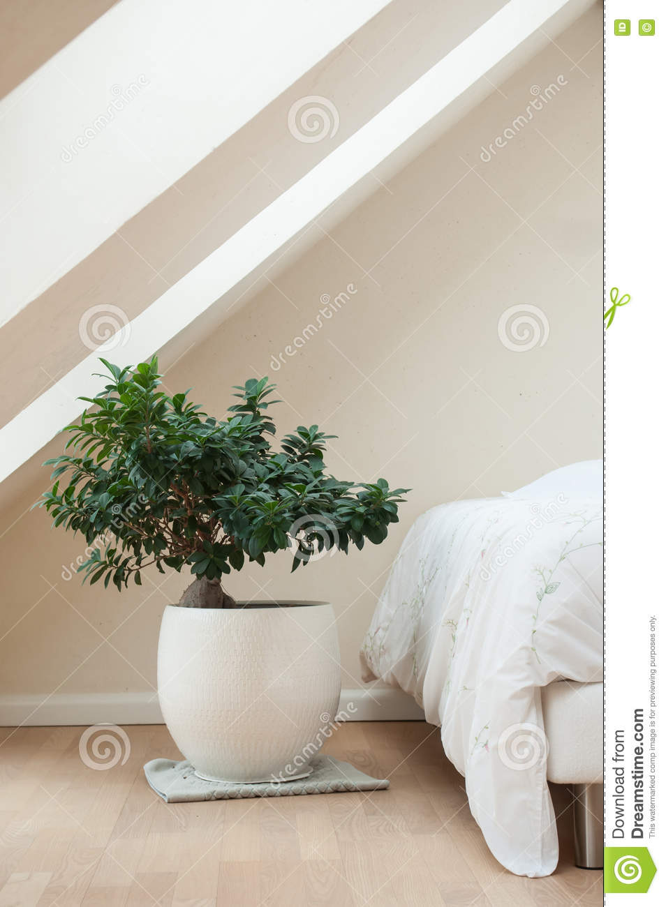 Camera Da Letto Con I Bonsai Decorativi Di Zen Immagine Stock ...