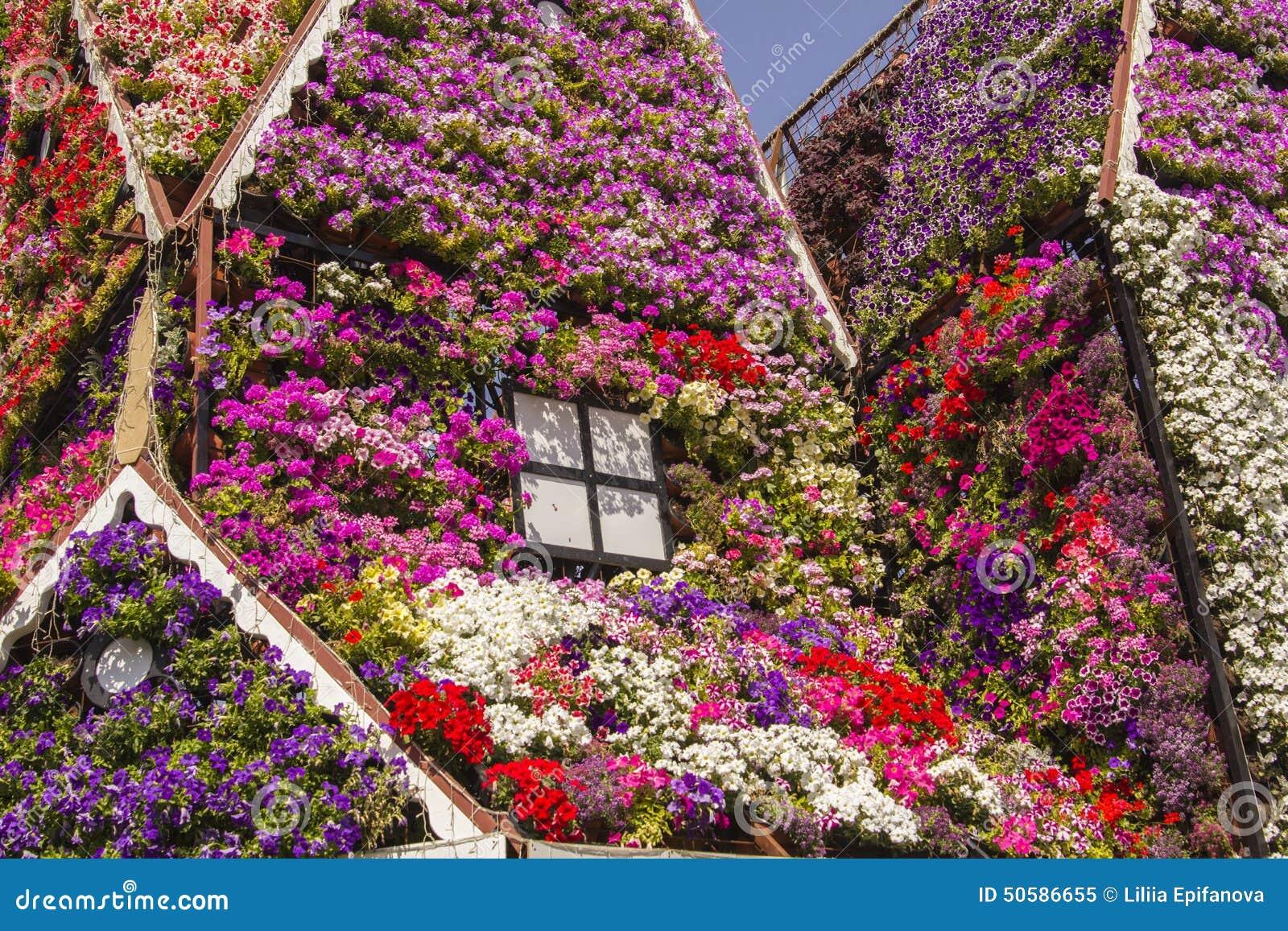Camera delle petunie variopinte dei fiori nel giardino di for Giardino fiori