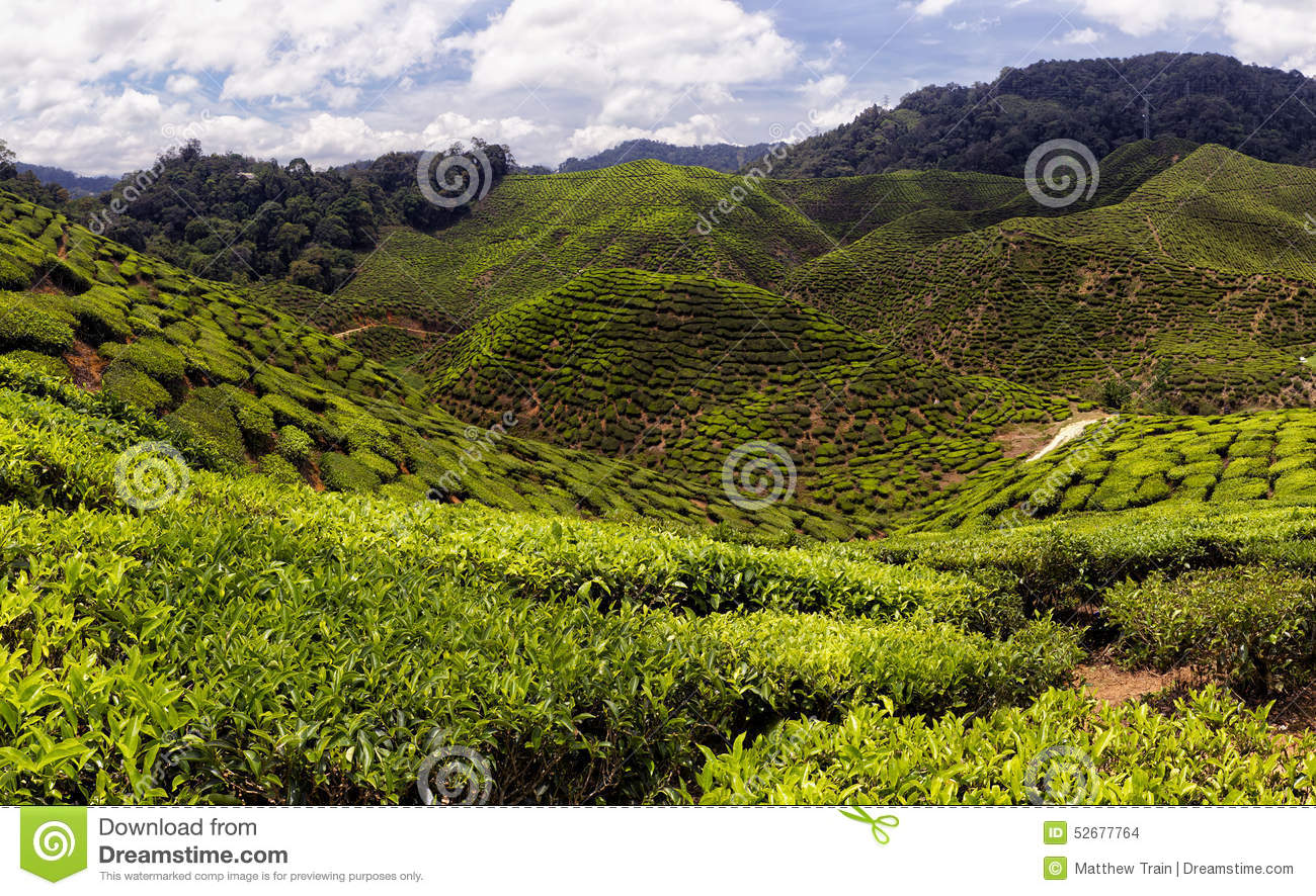 malaysia tea industry Aeu mba at the academy sri lanka offers fully accredited mba  factors affecting the yield in sri lankan tea industry  second batch graduating in malaysia .