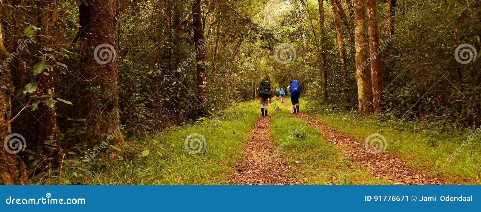 Caminantes en un bosque