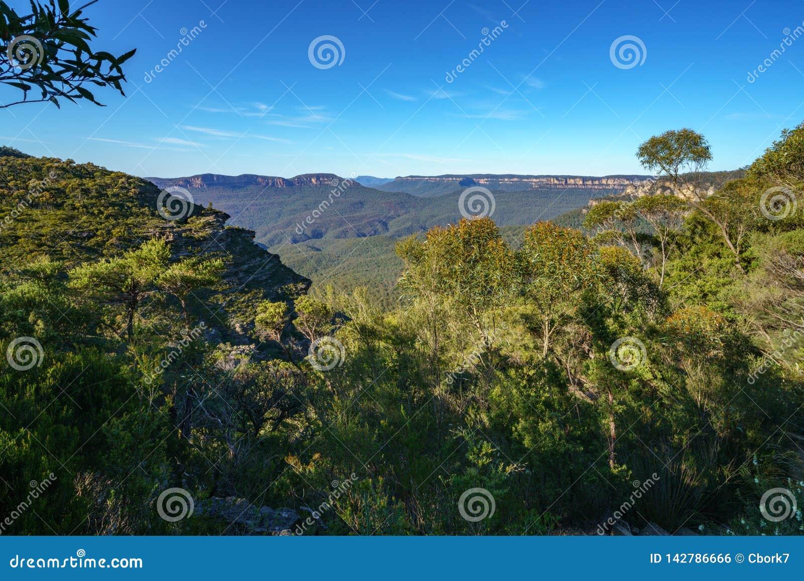Caminar el paseo magnífico del clifftop, montañas azules, Australia 8