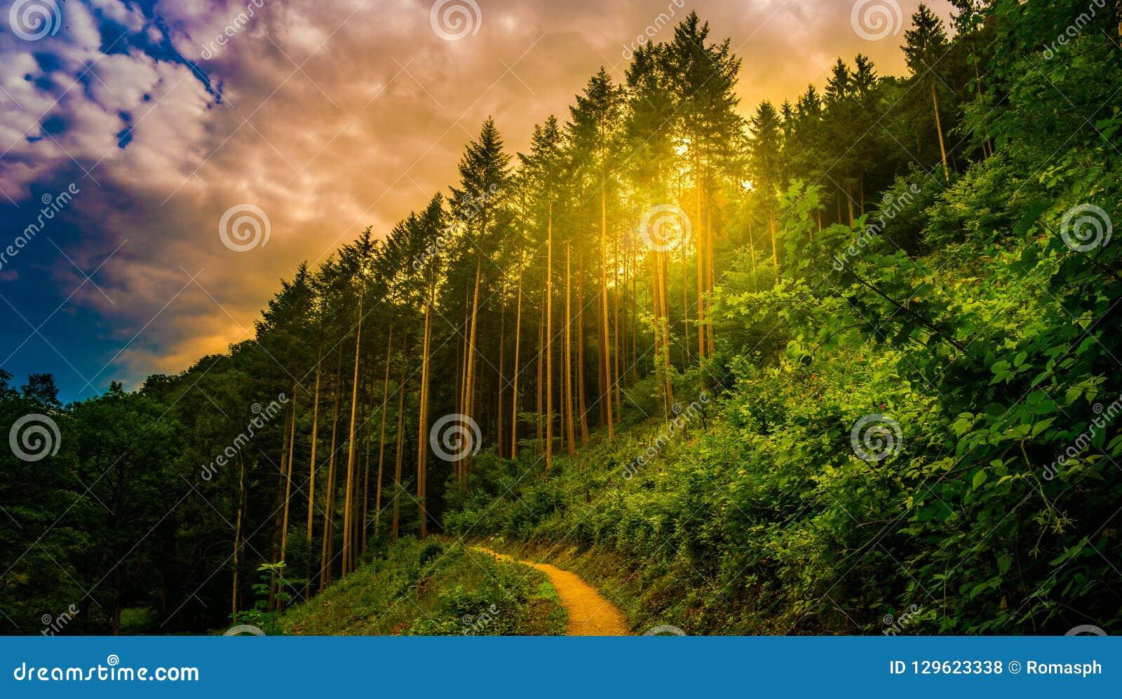 Caminar la trayectoria y la puesta del sol en la opinión panorámica de maderas hermosas, paisaje inspirado del verano en bosque