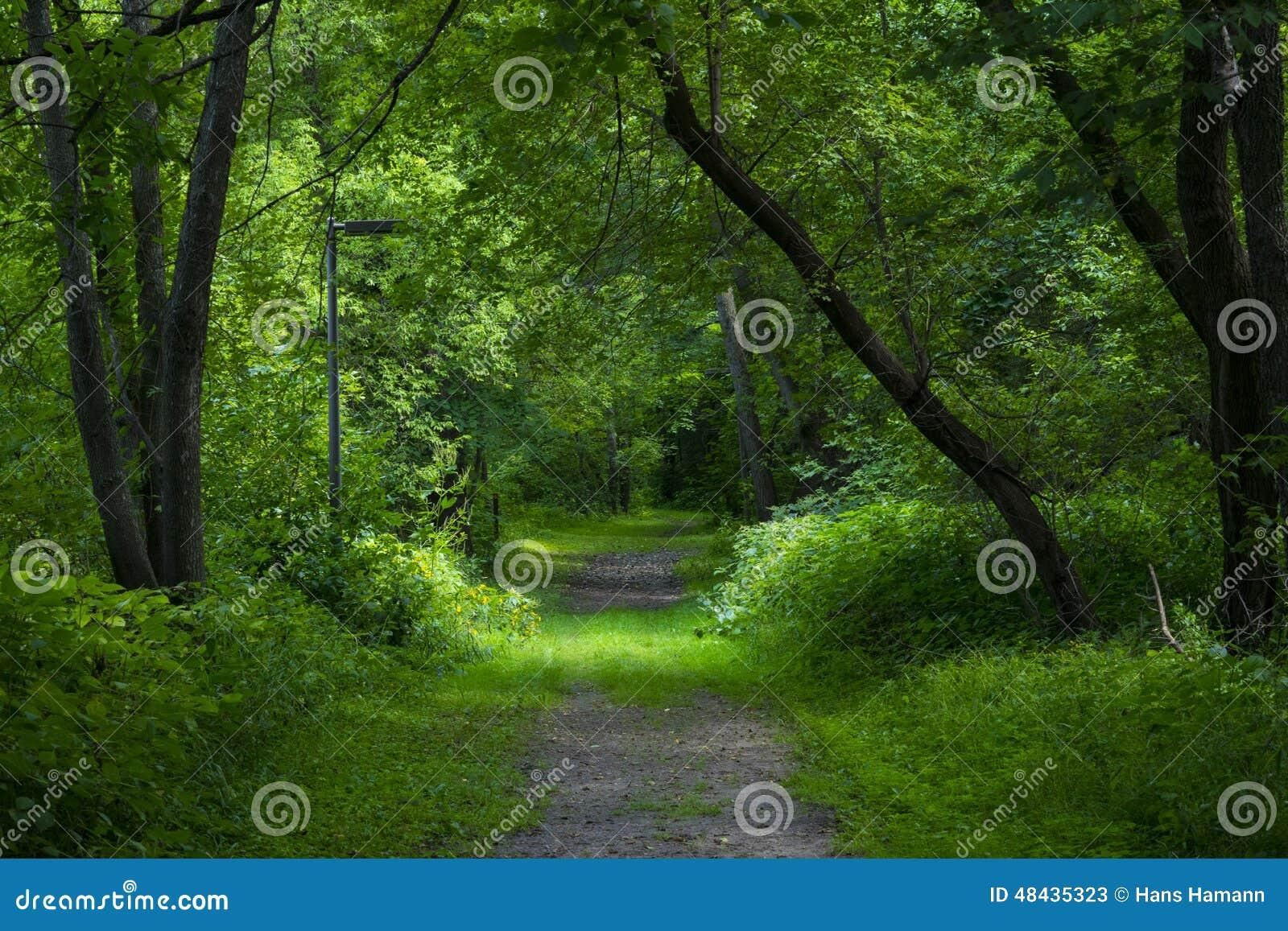 Caminata en el parque