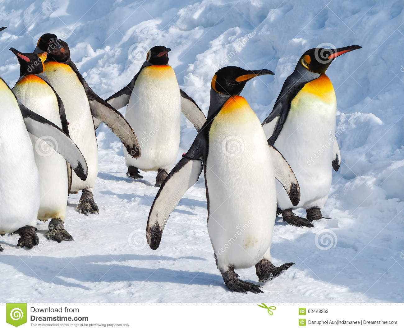 Caminhada do pinguim na neve