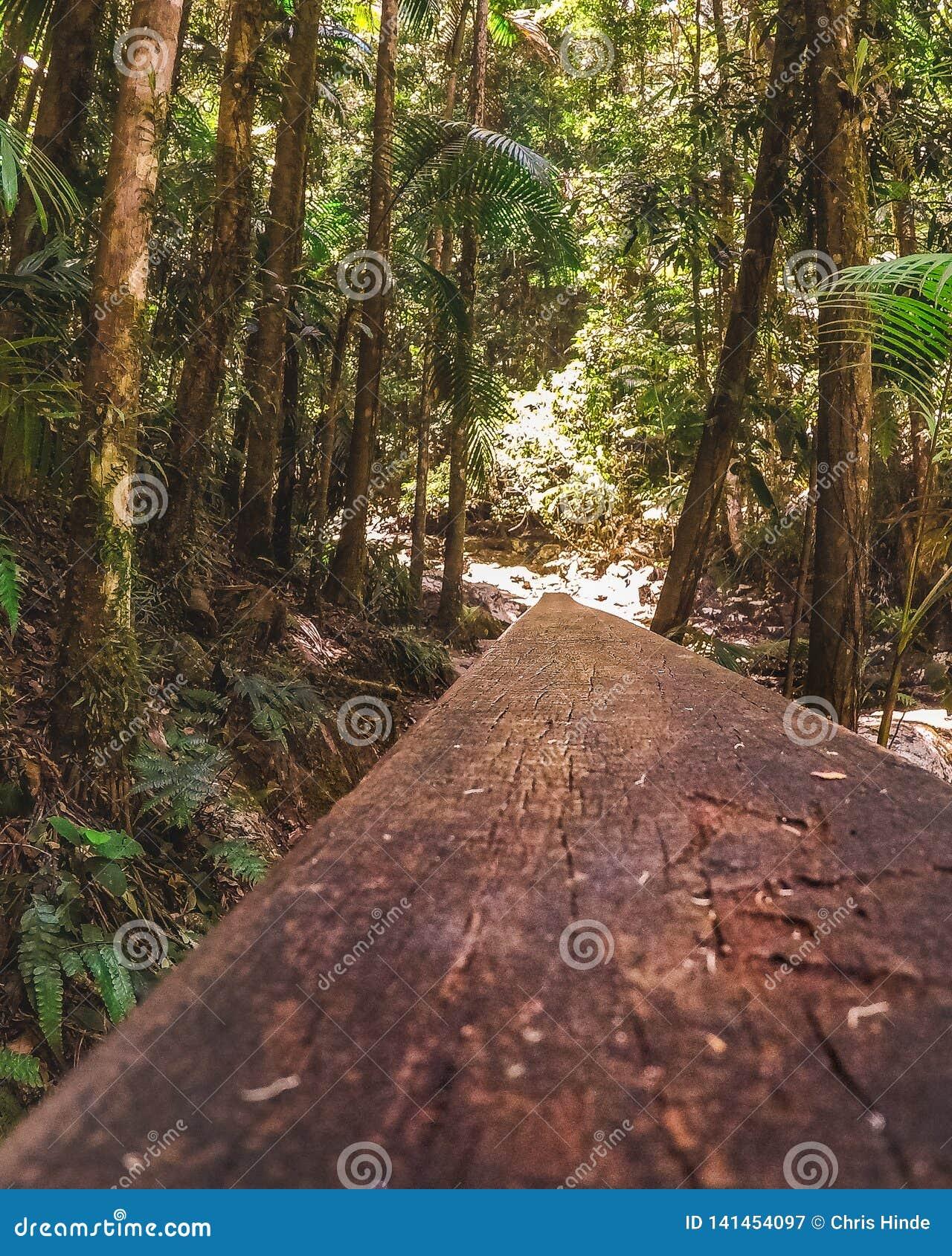 Caminhada do trilho de mão
