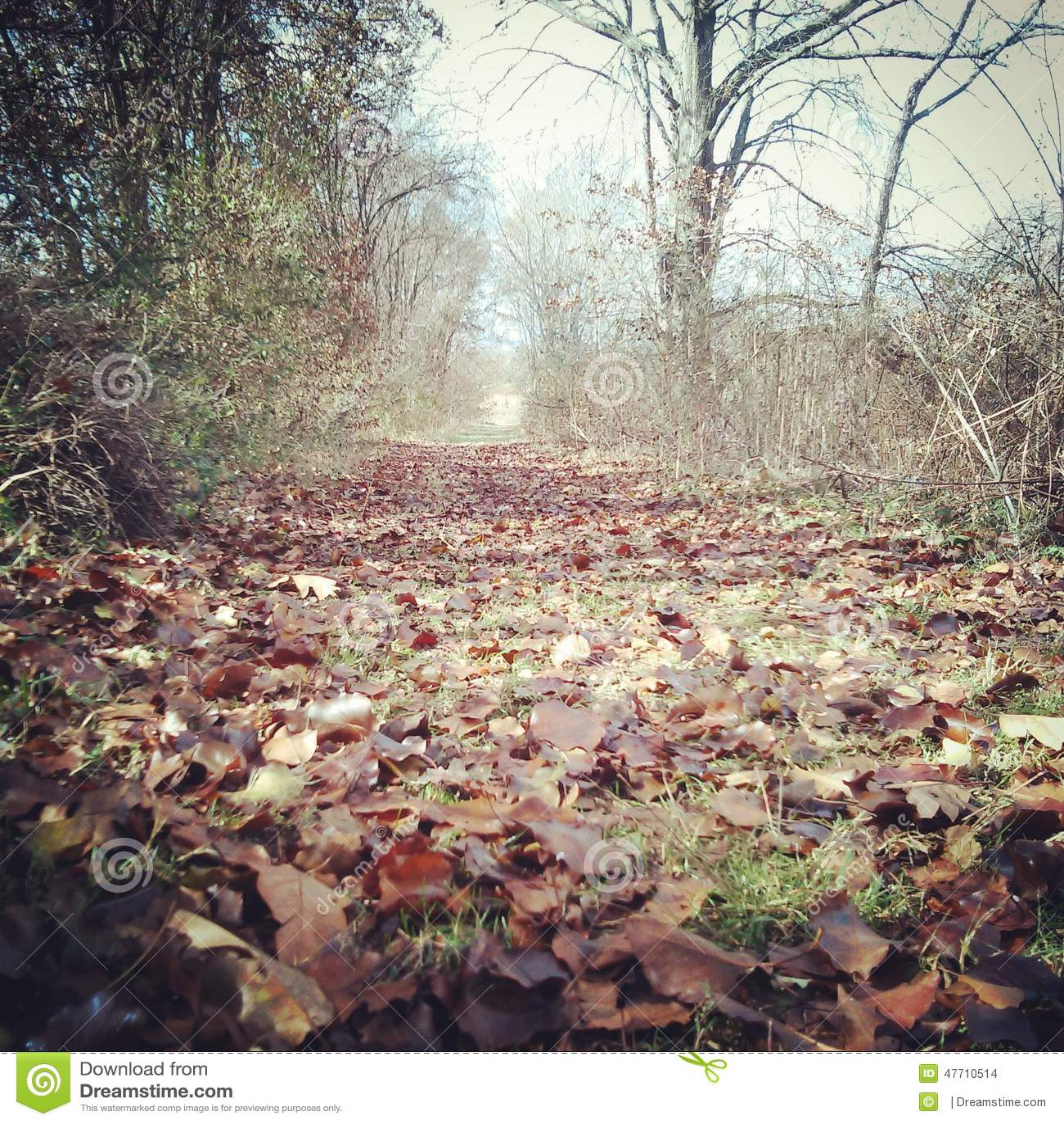 Caminhada longa