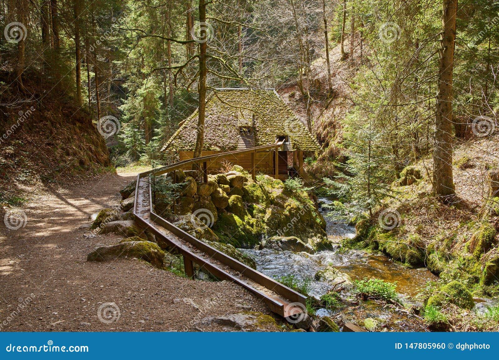 Caminhada na garganta de ravenna do rio na Floresta Negra em Alemanha