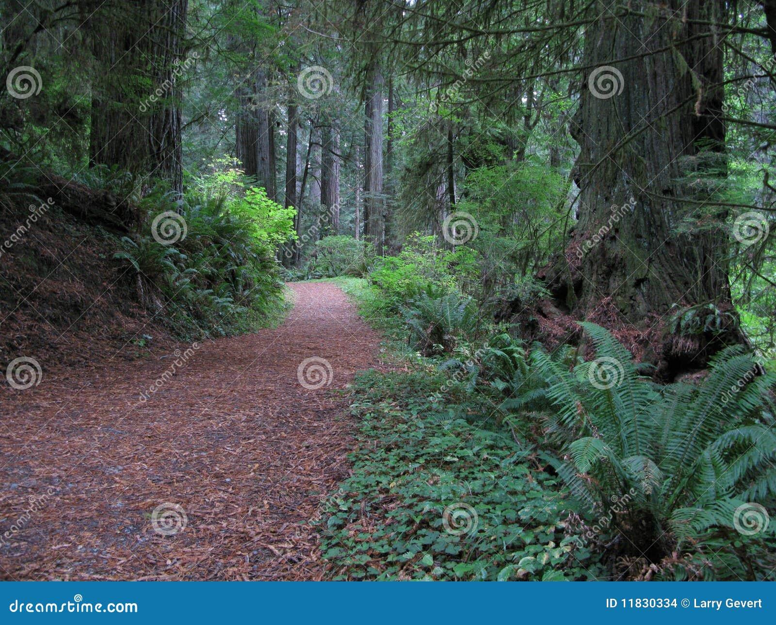 Caminhada nas madeiras