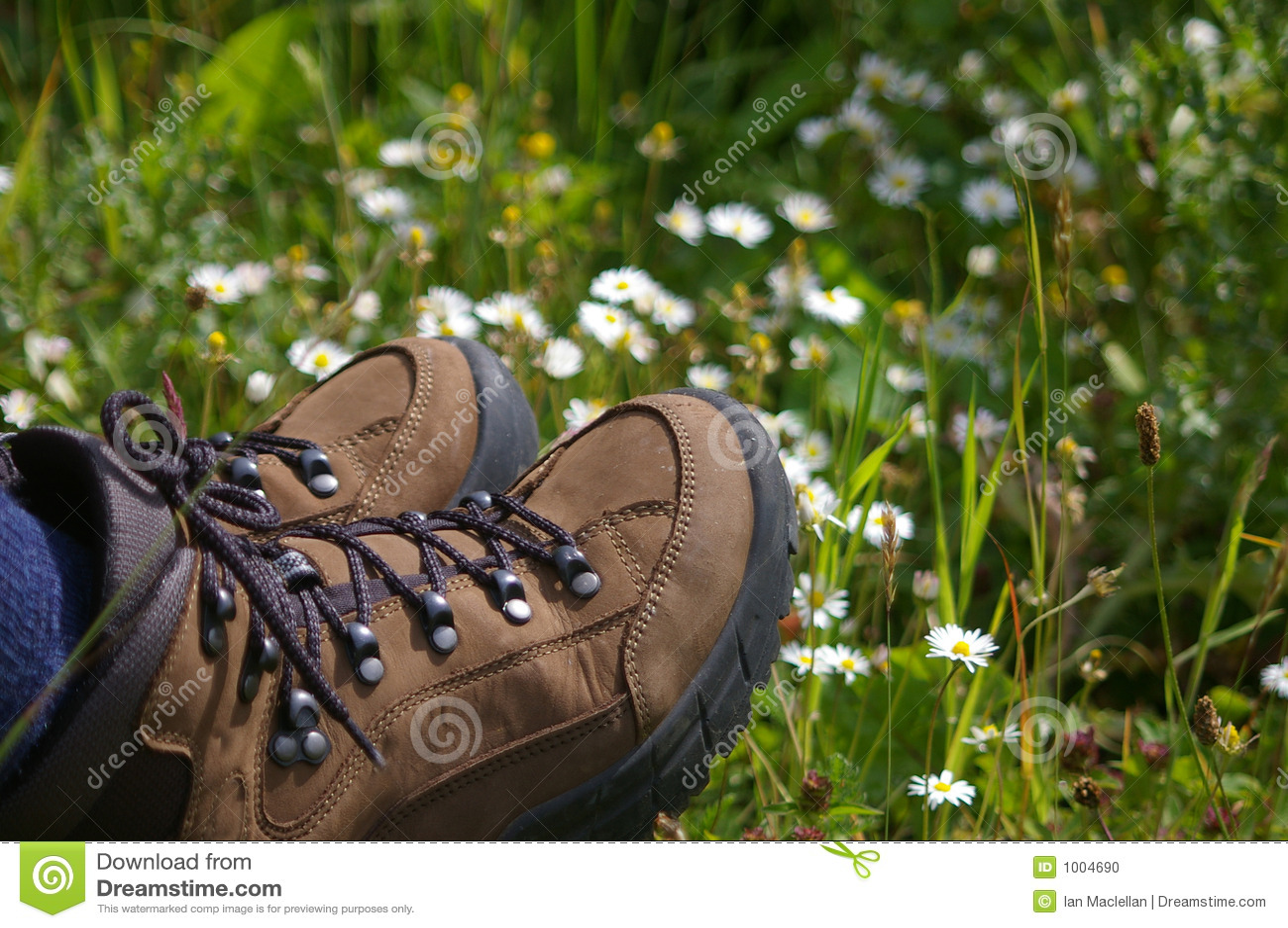Caminhando carregadores no campo dos daisys