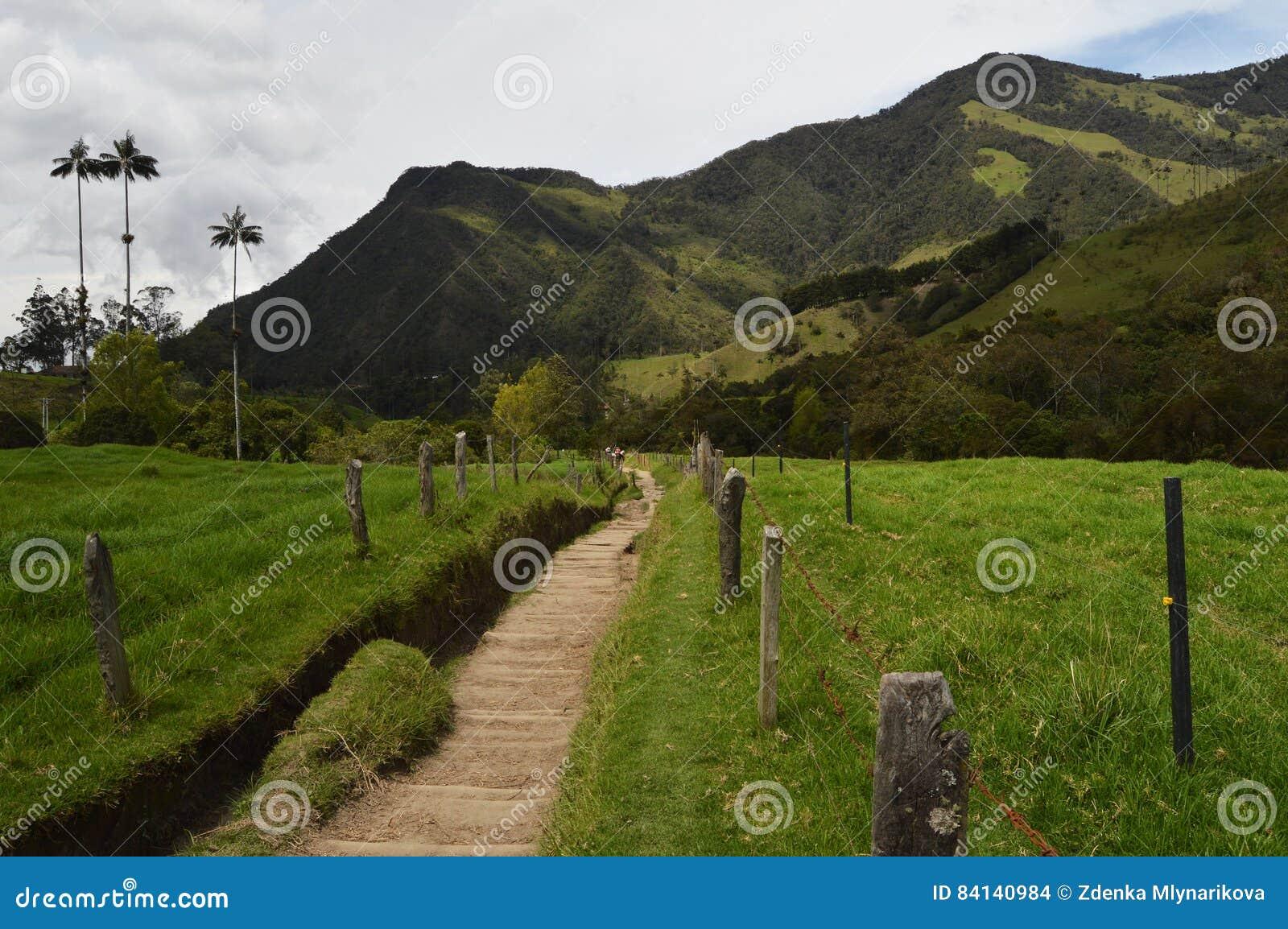 Caminhando no vale de Cocora, Colômbia