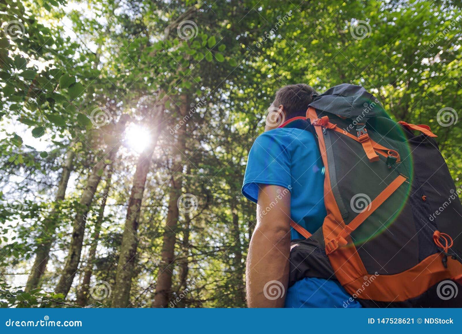 Caminhante masculino com a trouxa grande que olha a luz solar na floresta
