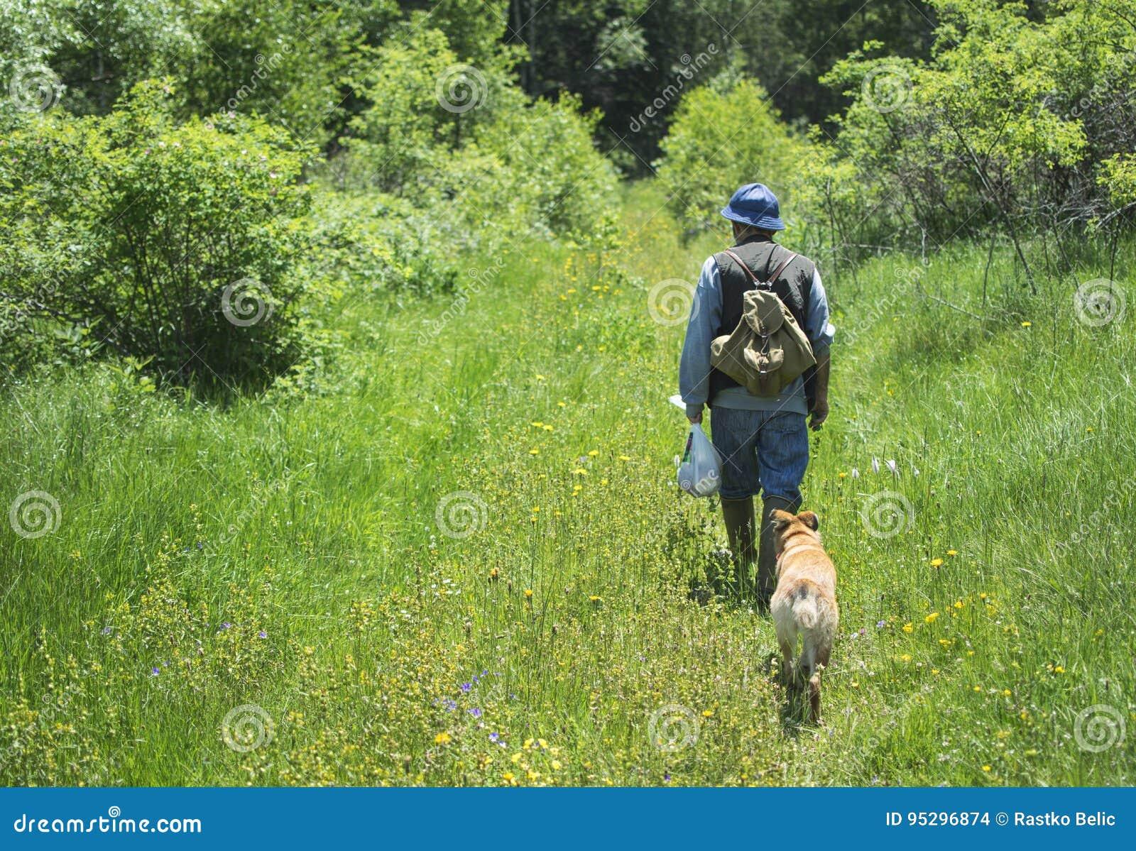 Caminhante que anda com os cães na floresta da montanha