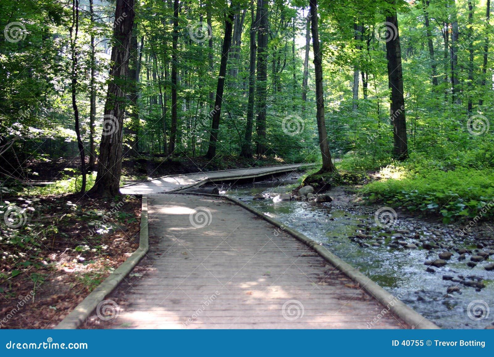 Caminho arborizado através da floresta