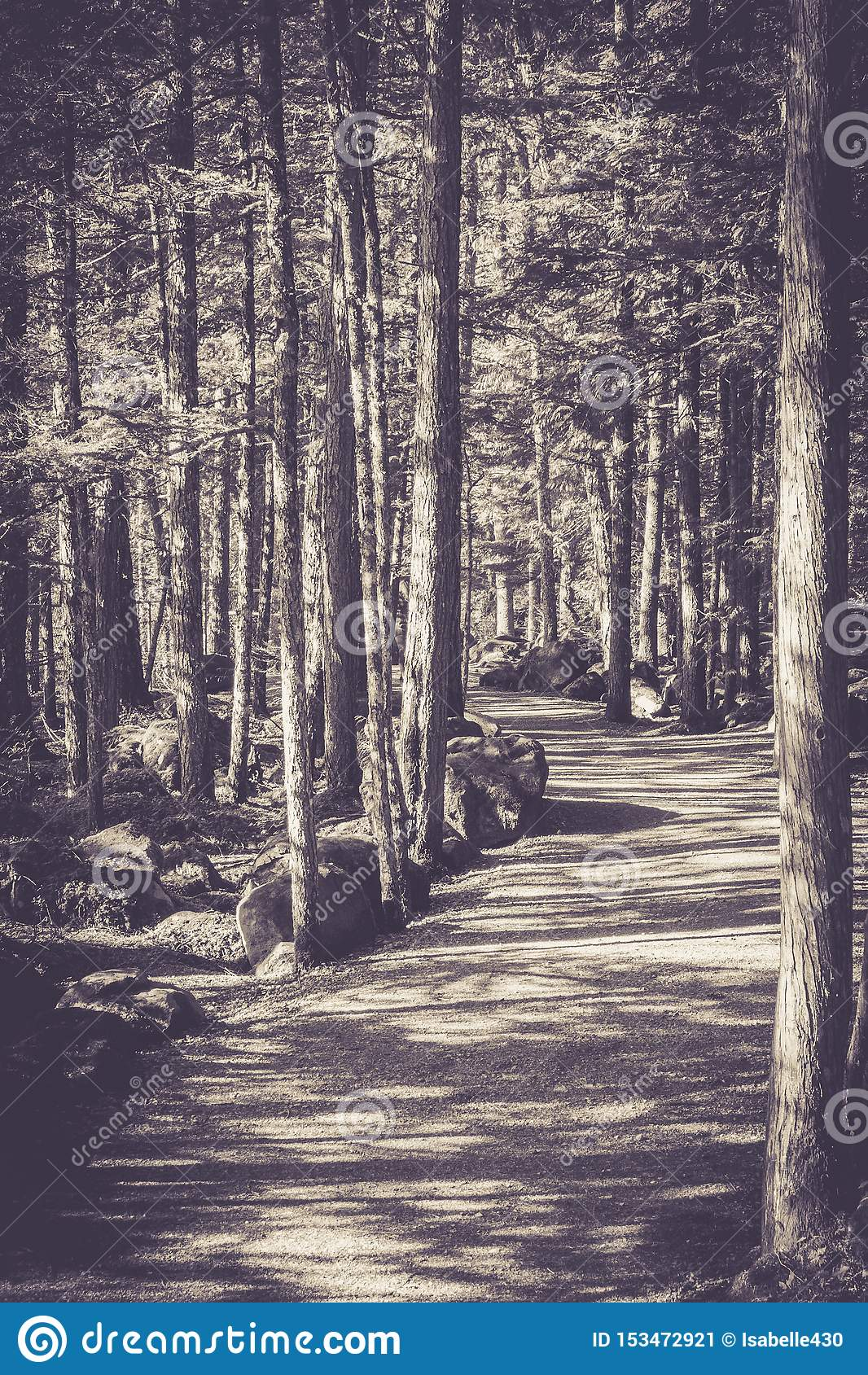 Caminho monocromático e árvores