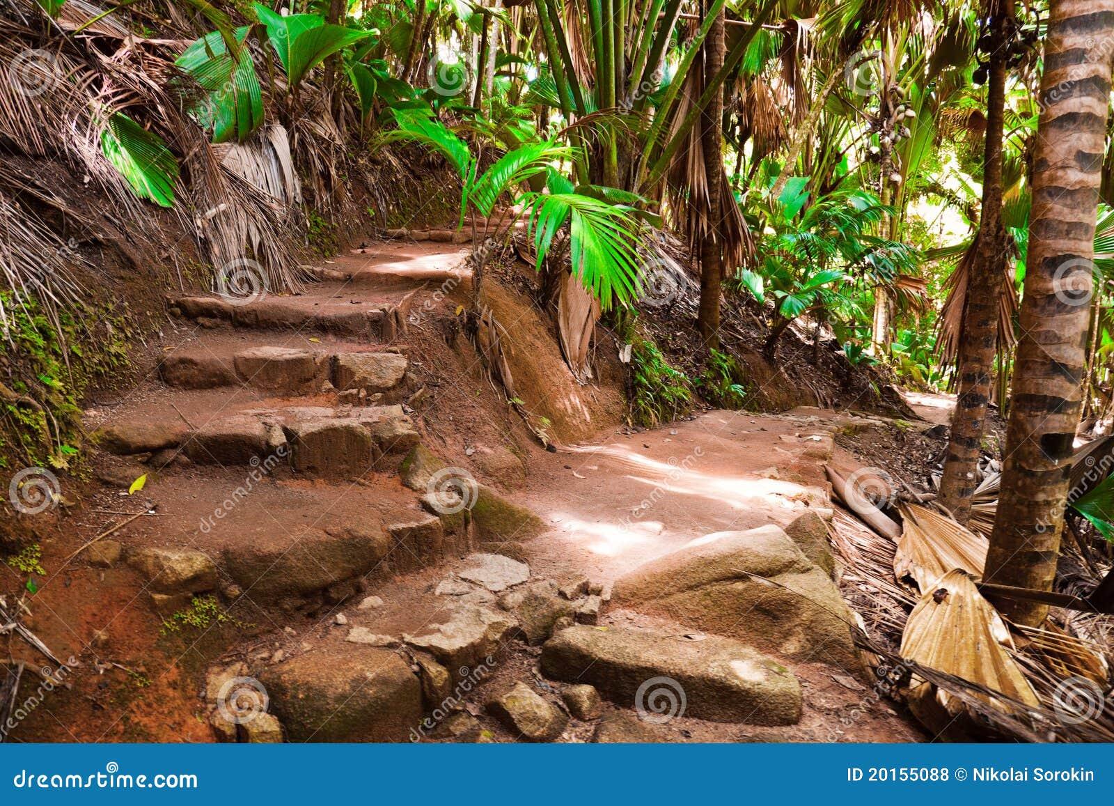 Caminho na selva, Vallee de MAI, Seychelles
