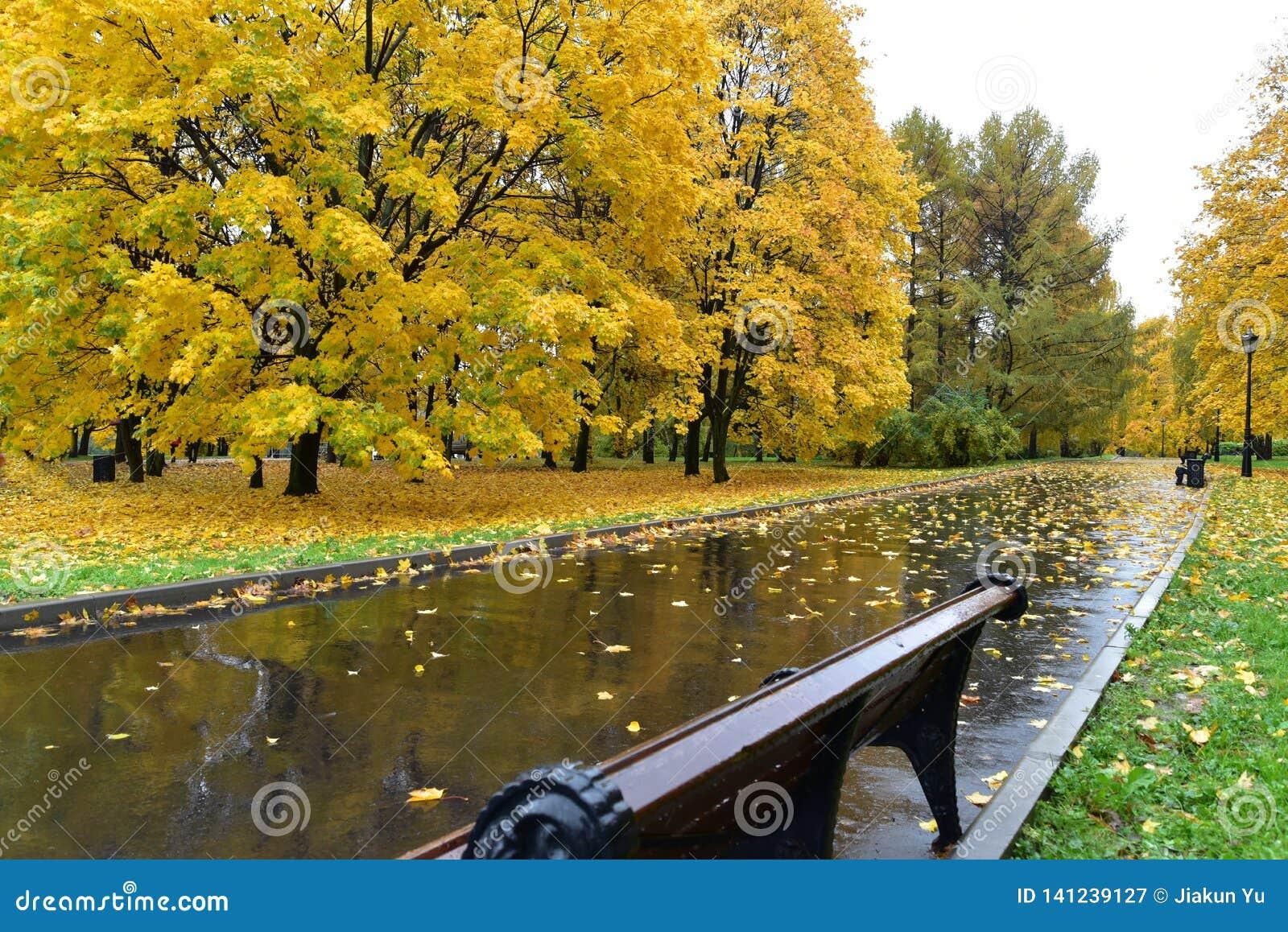 Camino con el follaje de otoño y los árboles amarillos