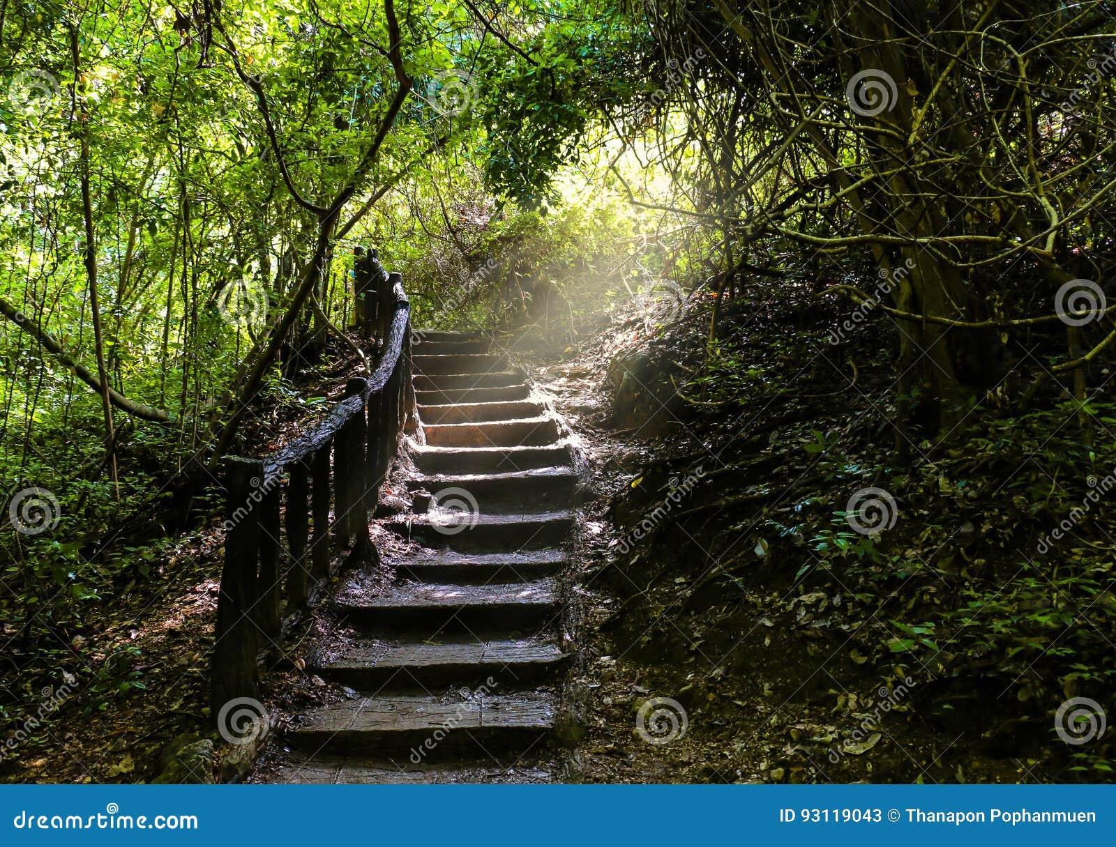 Camino de la escalera que va un camino largo hasta bosque denso recientemente verde